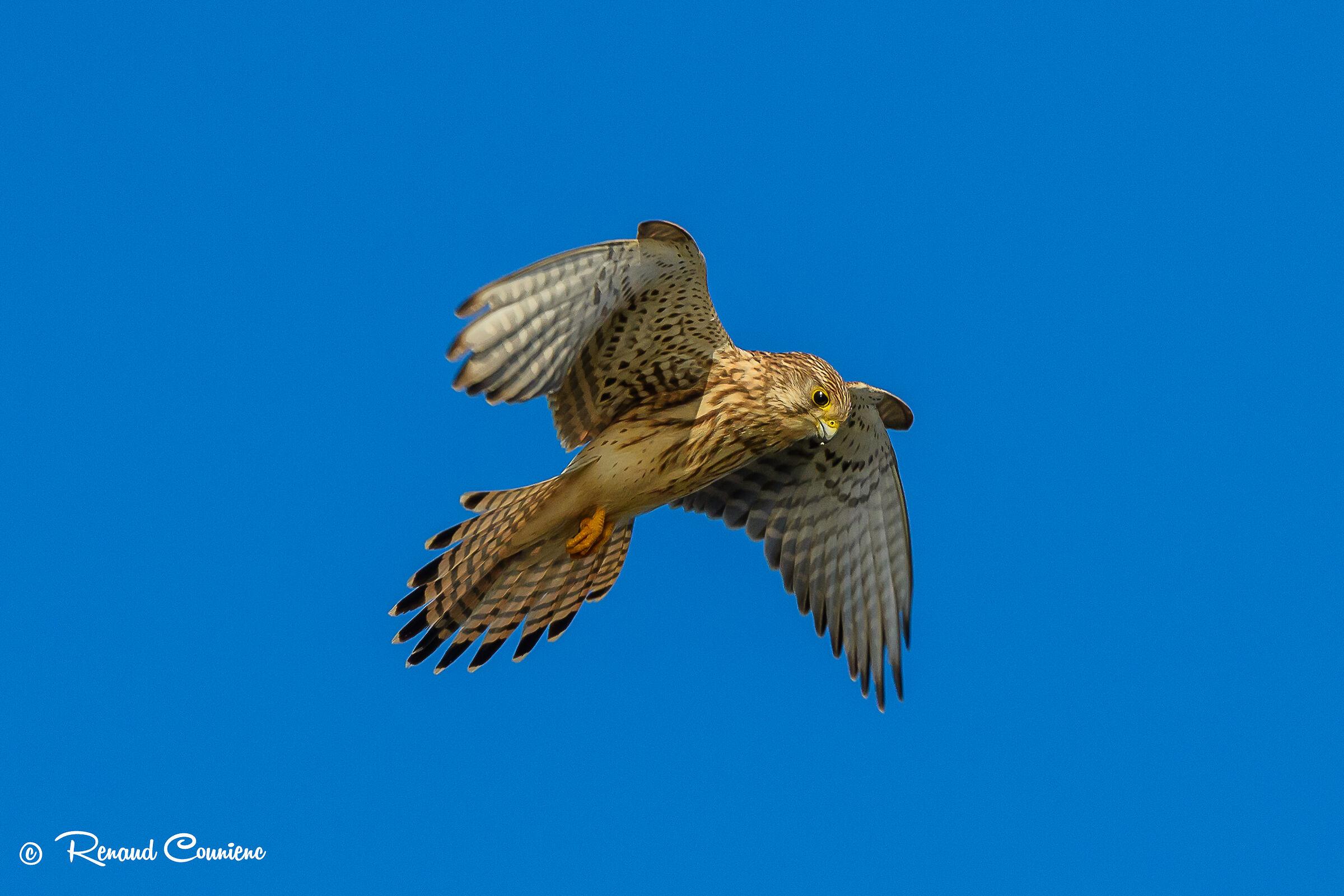 flight of the Holy Spirit...