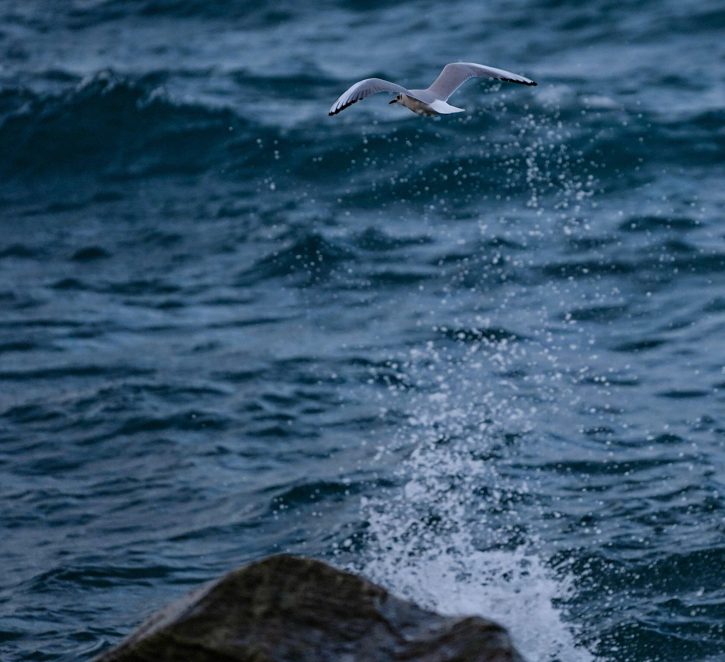 Flight over the wave...