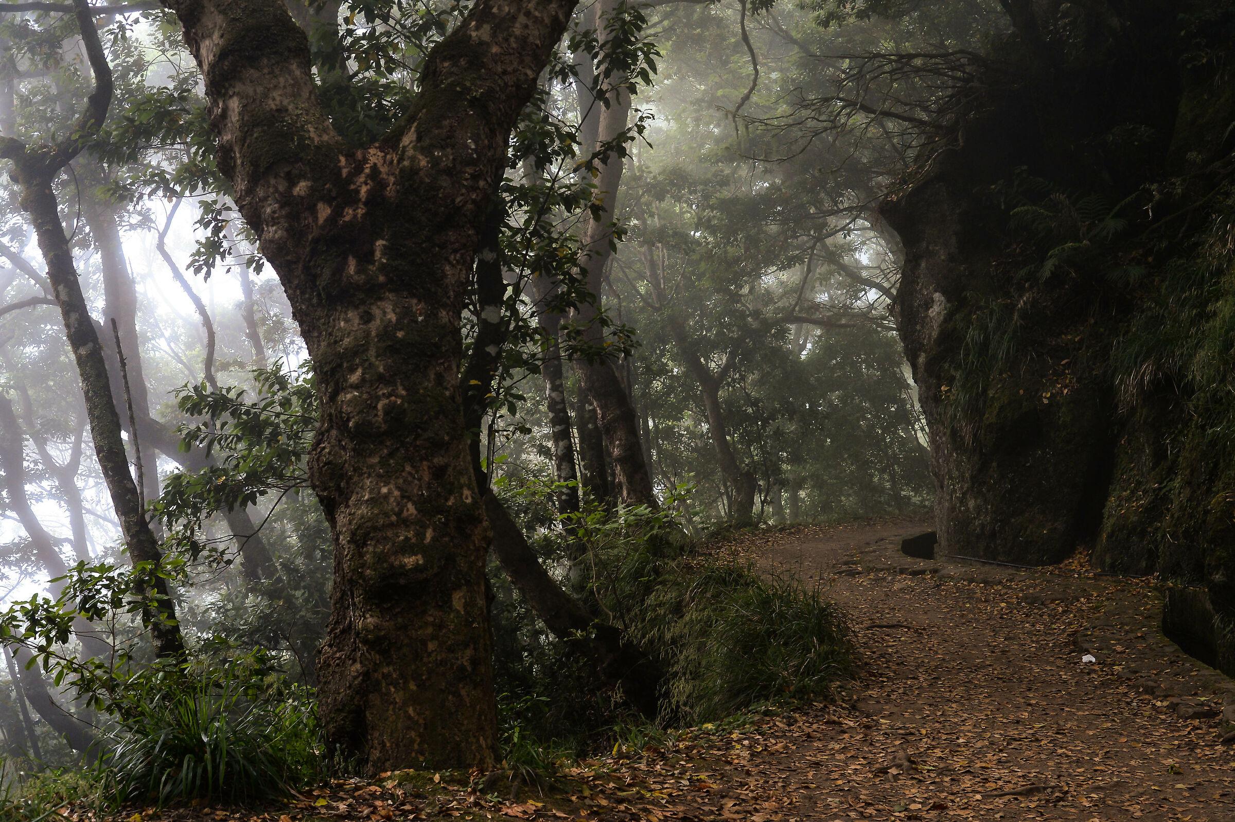 Balcoes, Madeira...