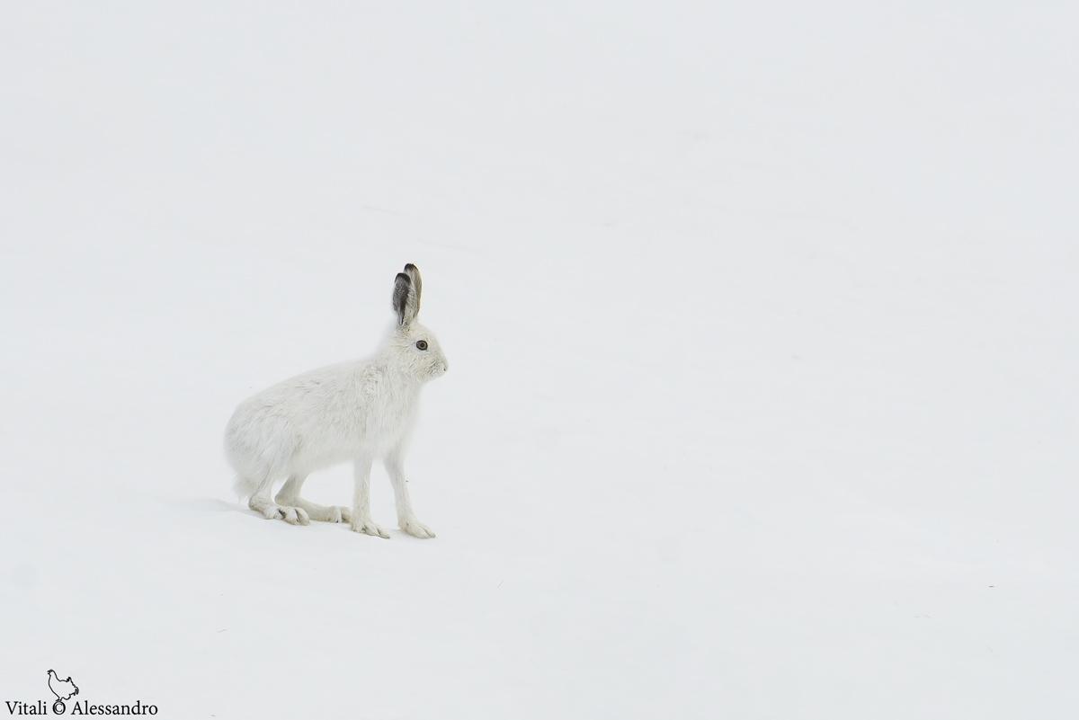 Nel bianco.......