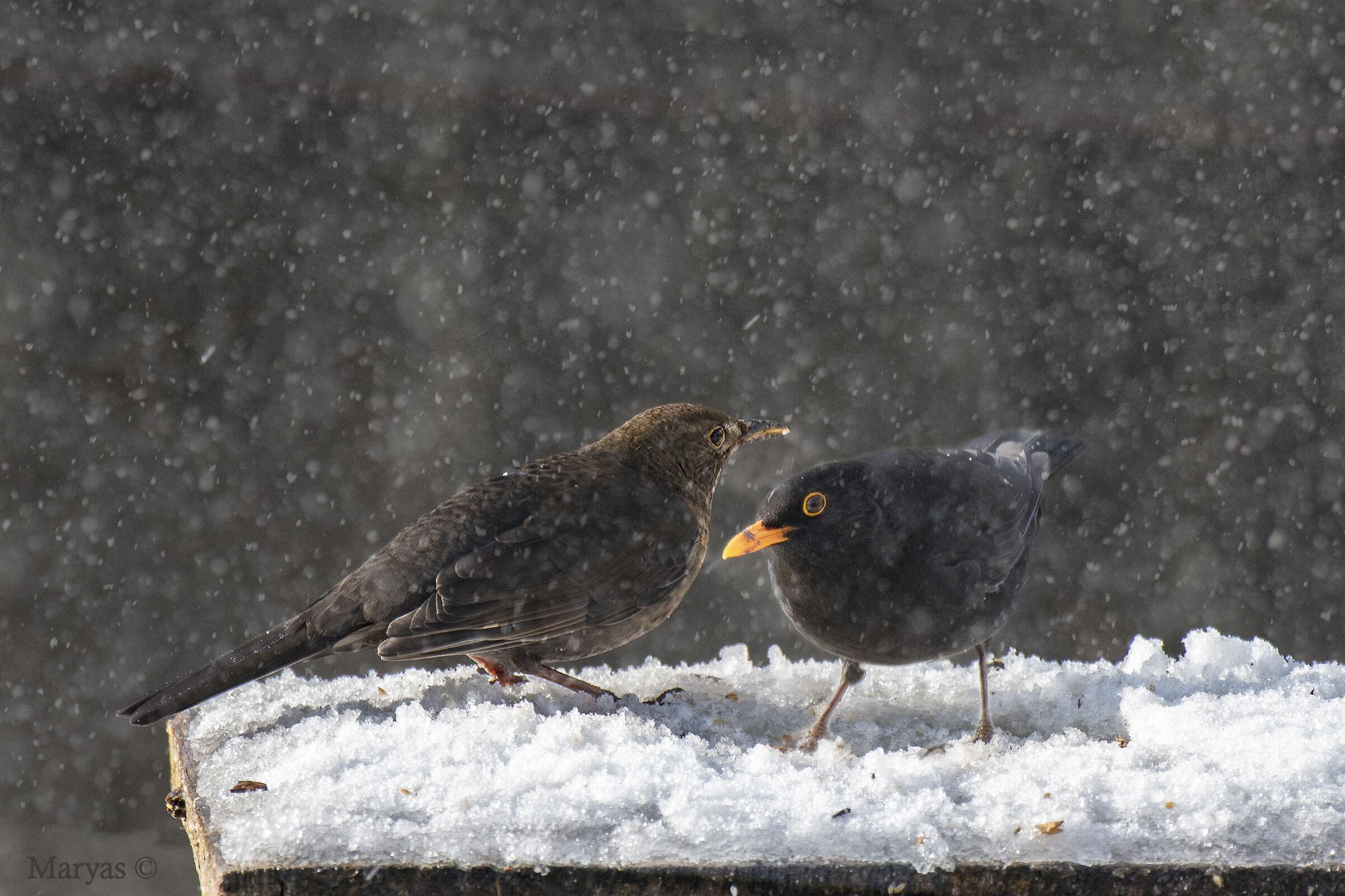 Coppietta sotto la neve...