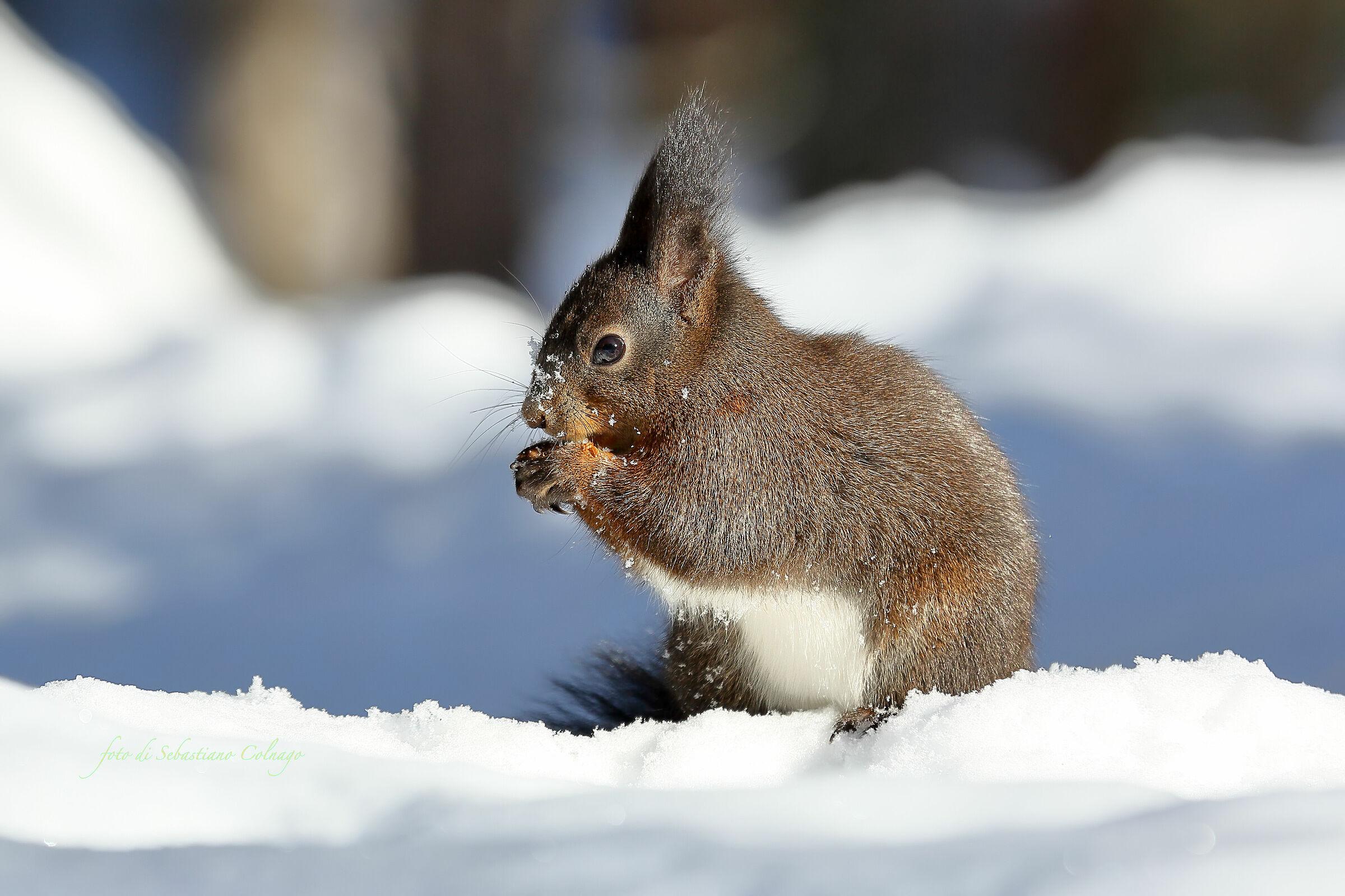 Lo scoiattolo affamato...