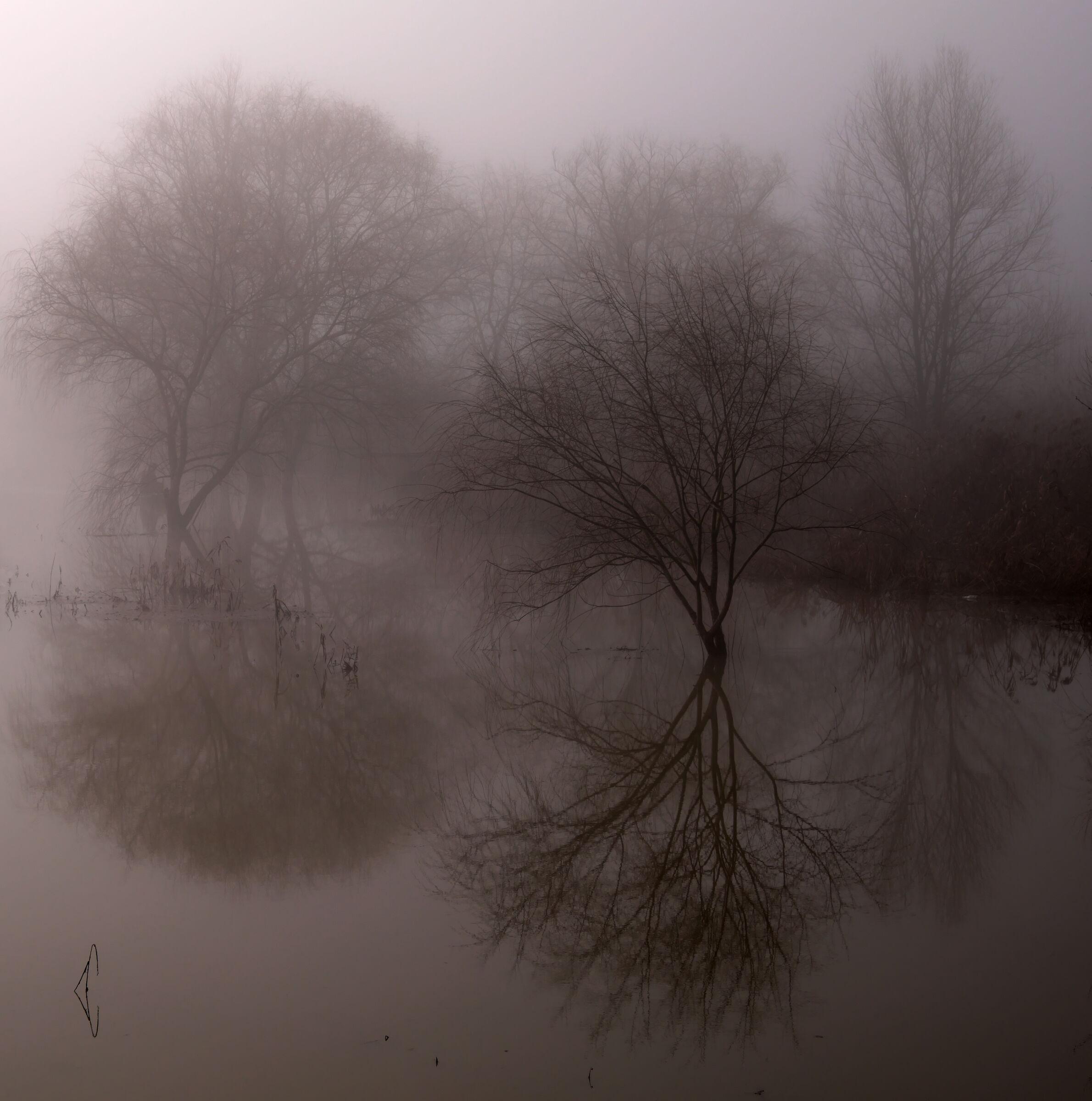La nebbia si prende il padule...