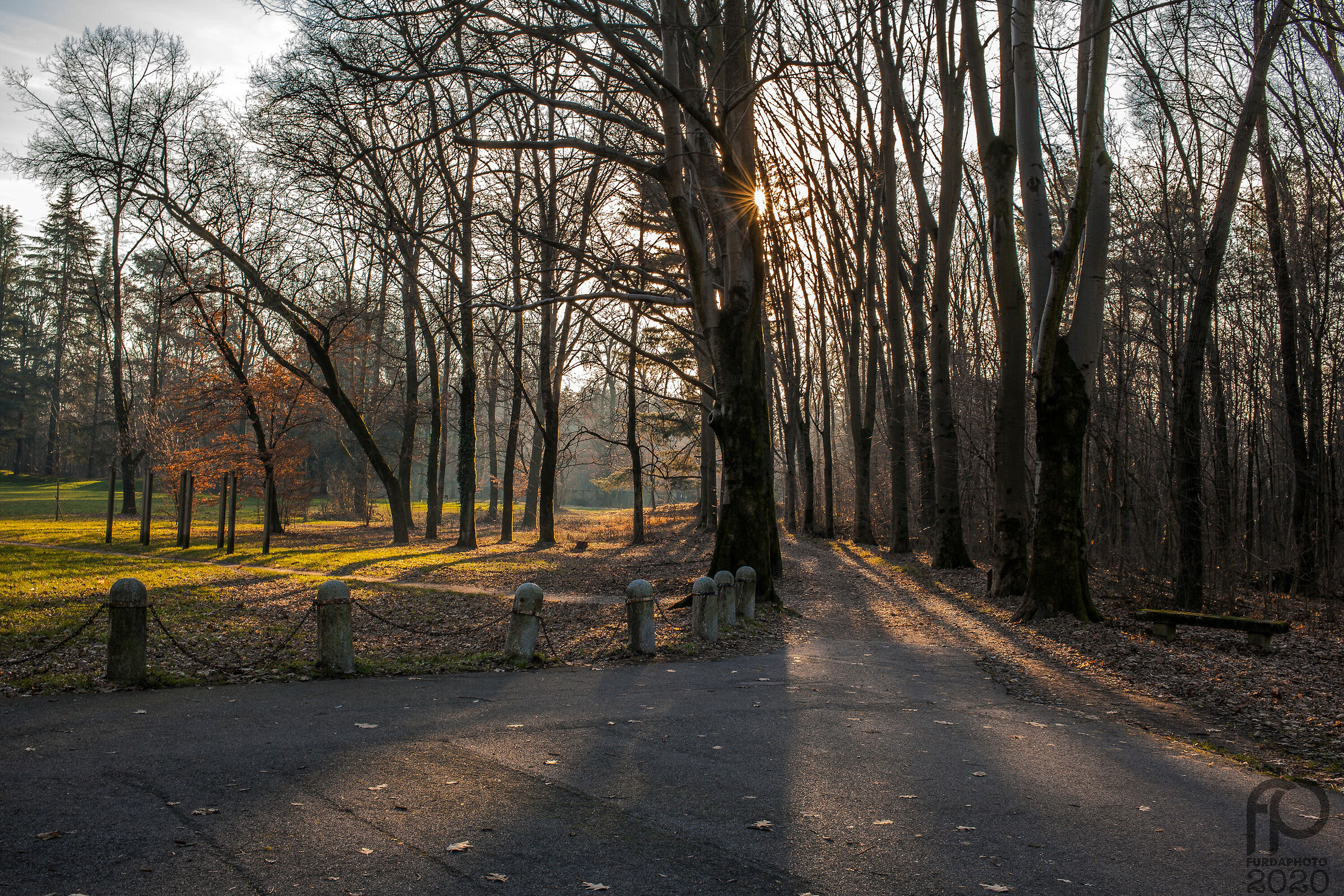 Parco di Monza - Gennaio 2020...
