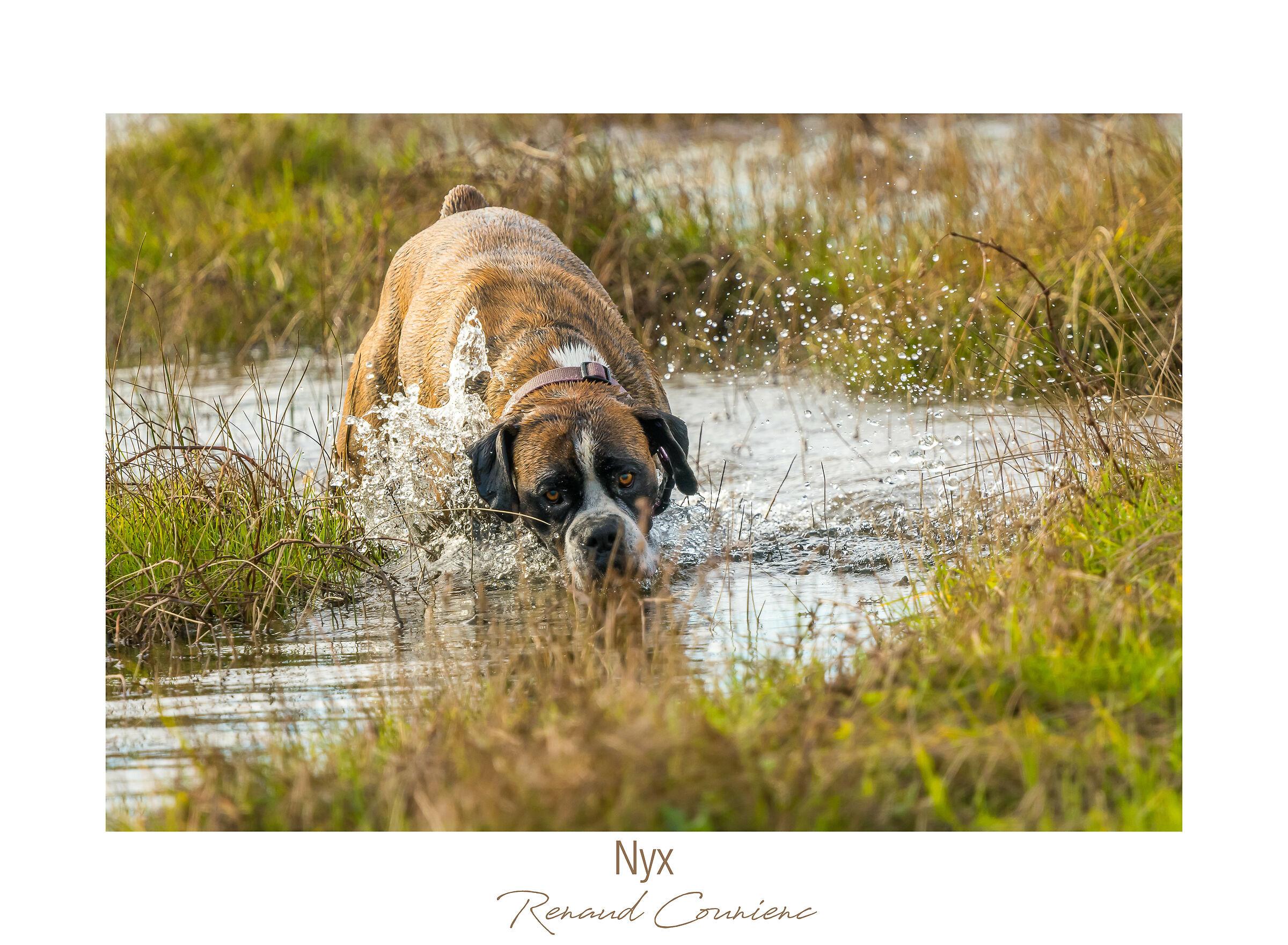 I do like hunting dogs...