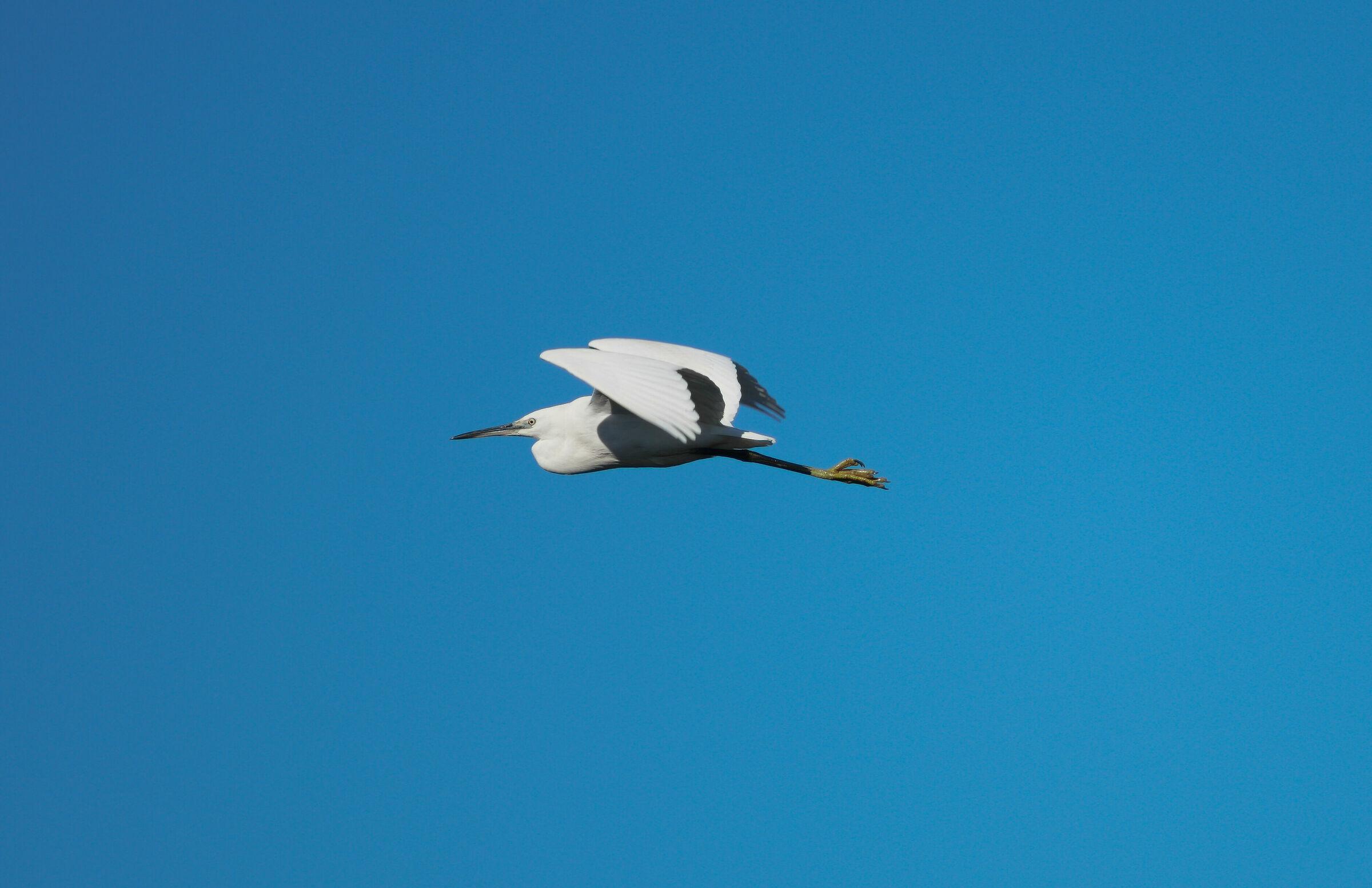 Airon in flight...