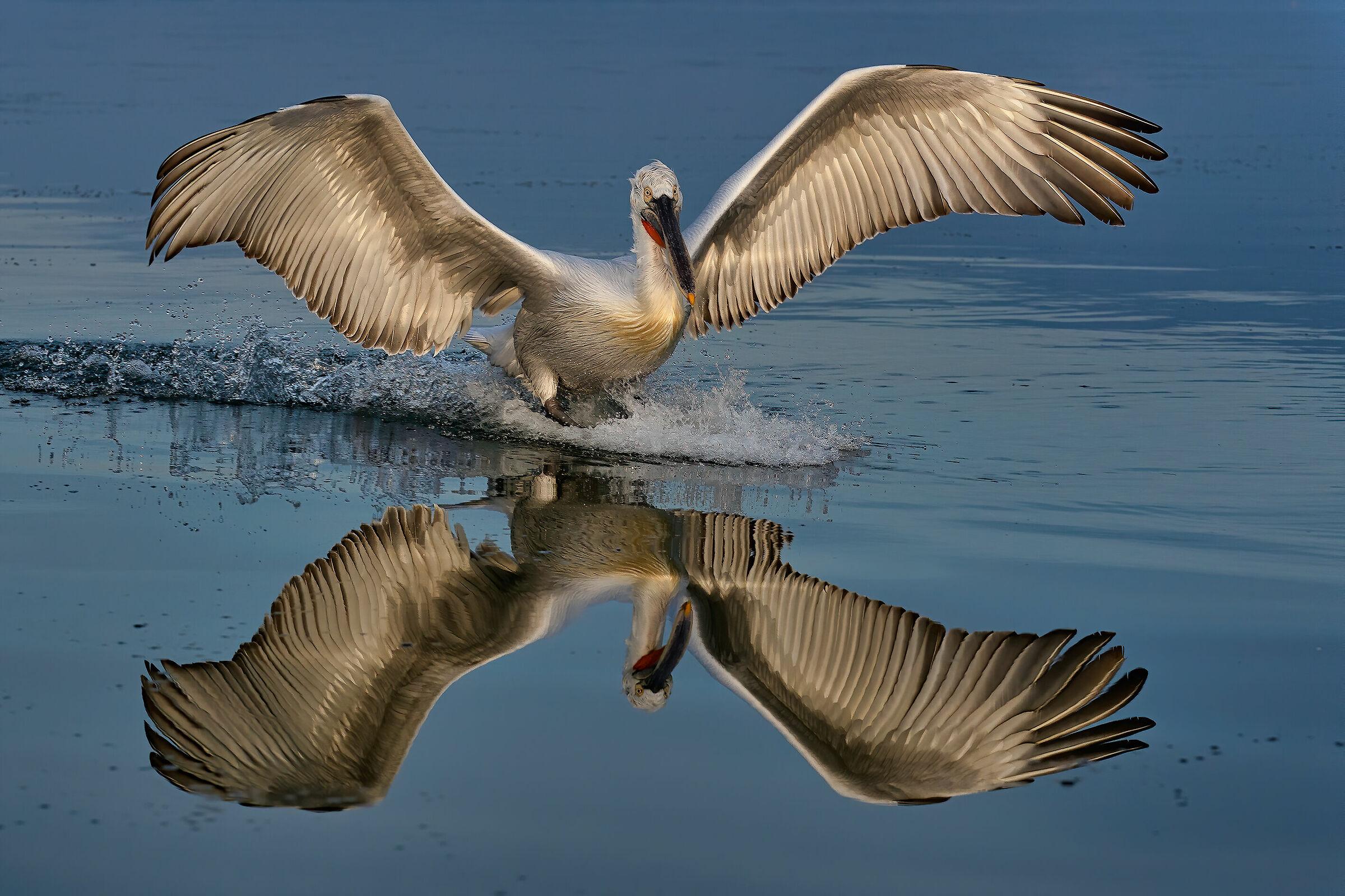 Landing...in a mirror...