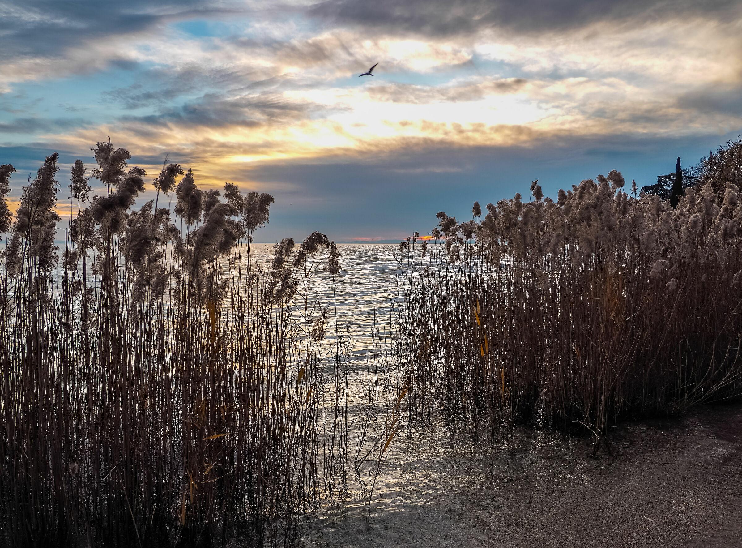 walk among the reeds...