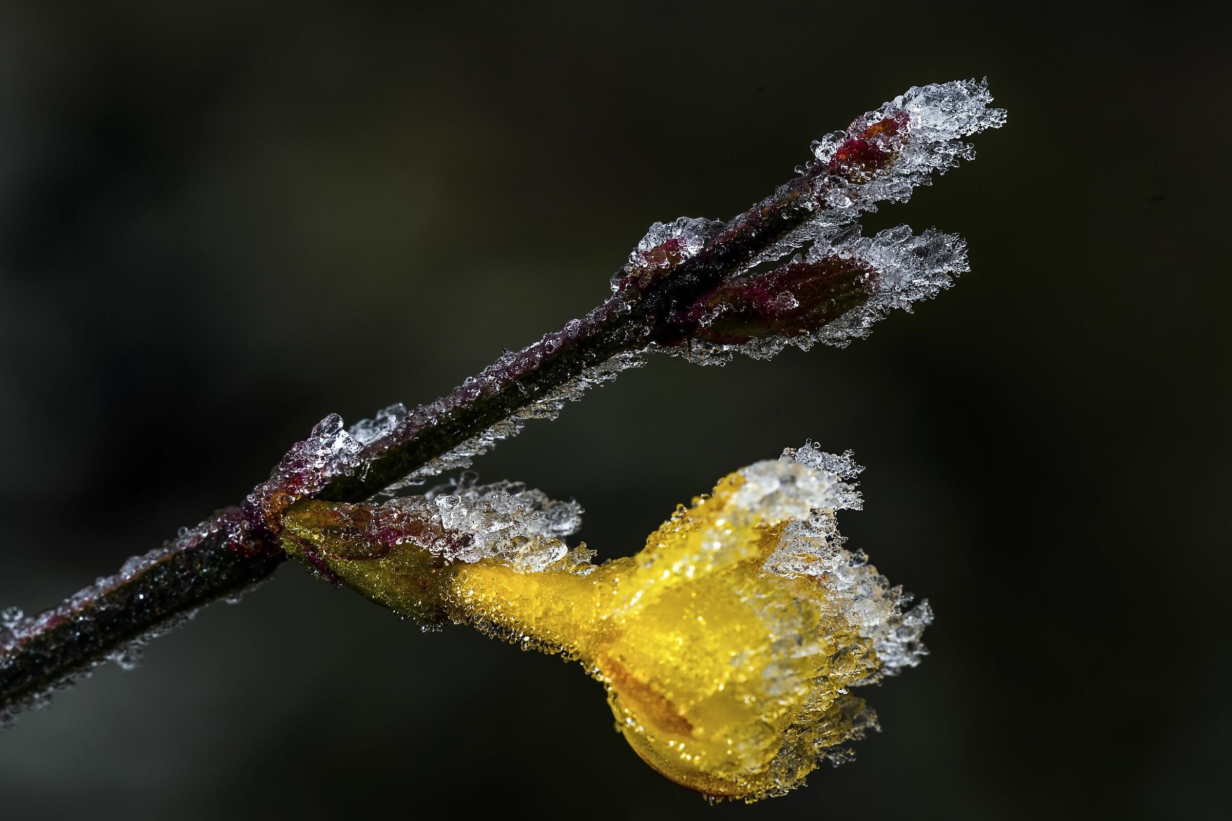 Frostwork...