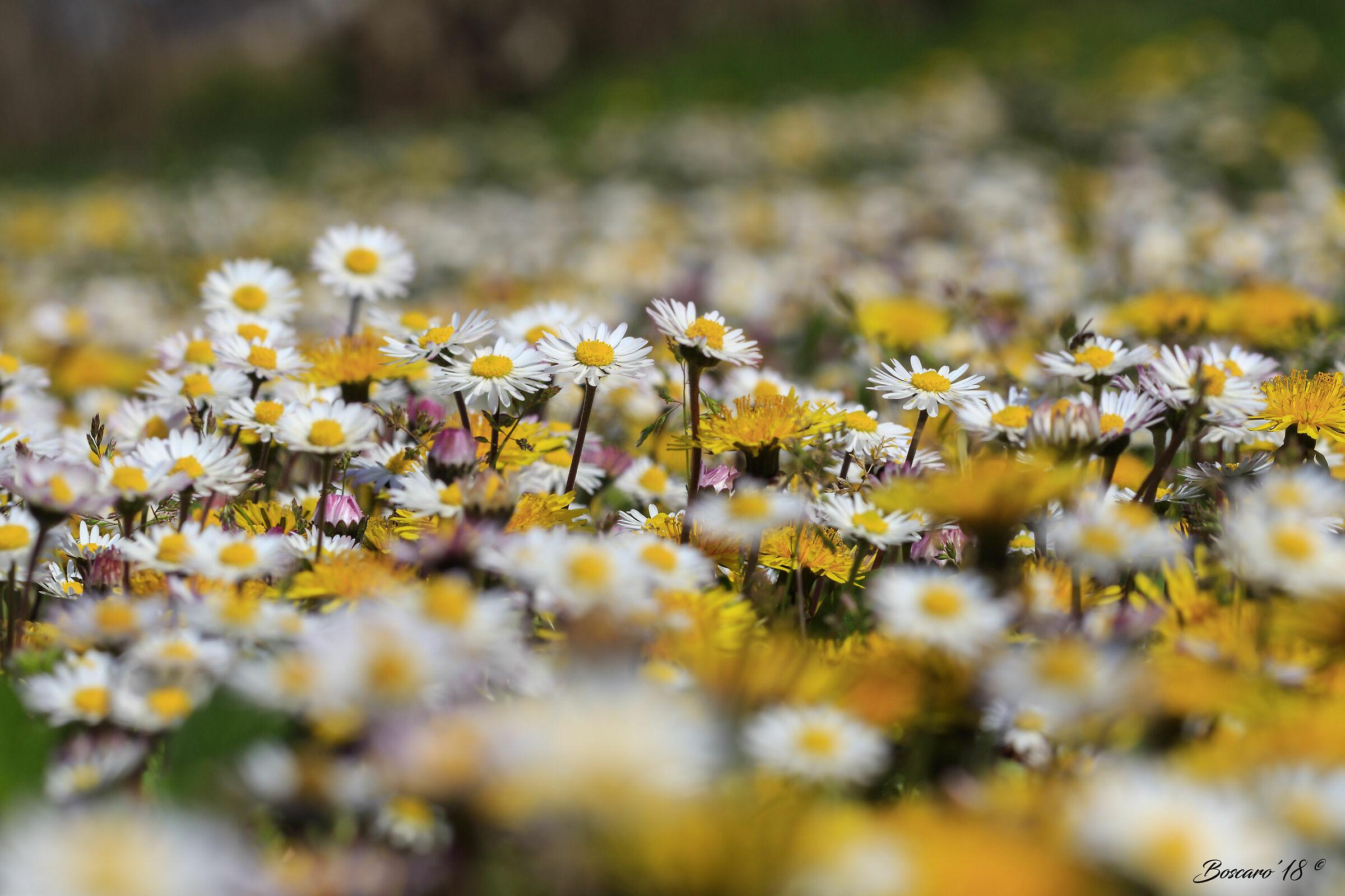 Meadow in bloom...
