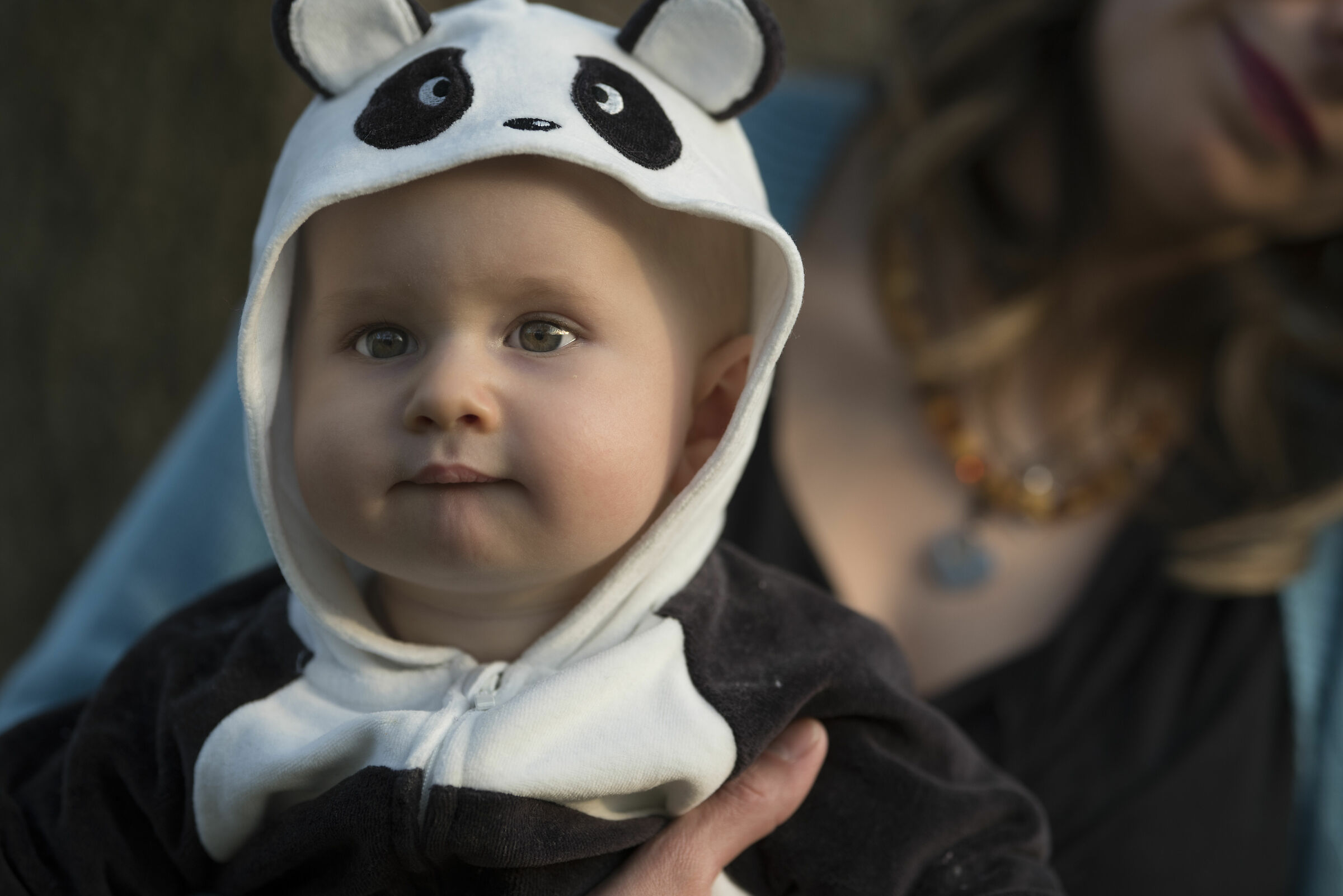 The panda...