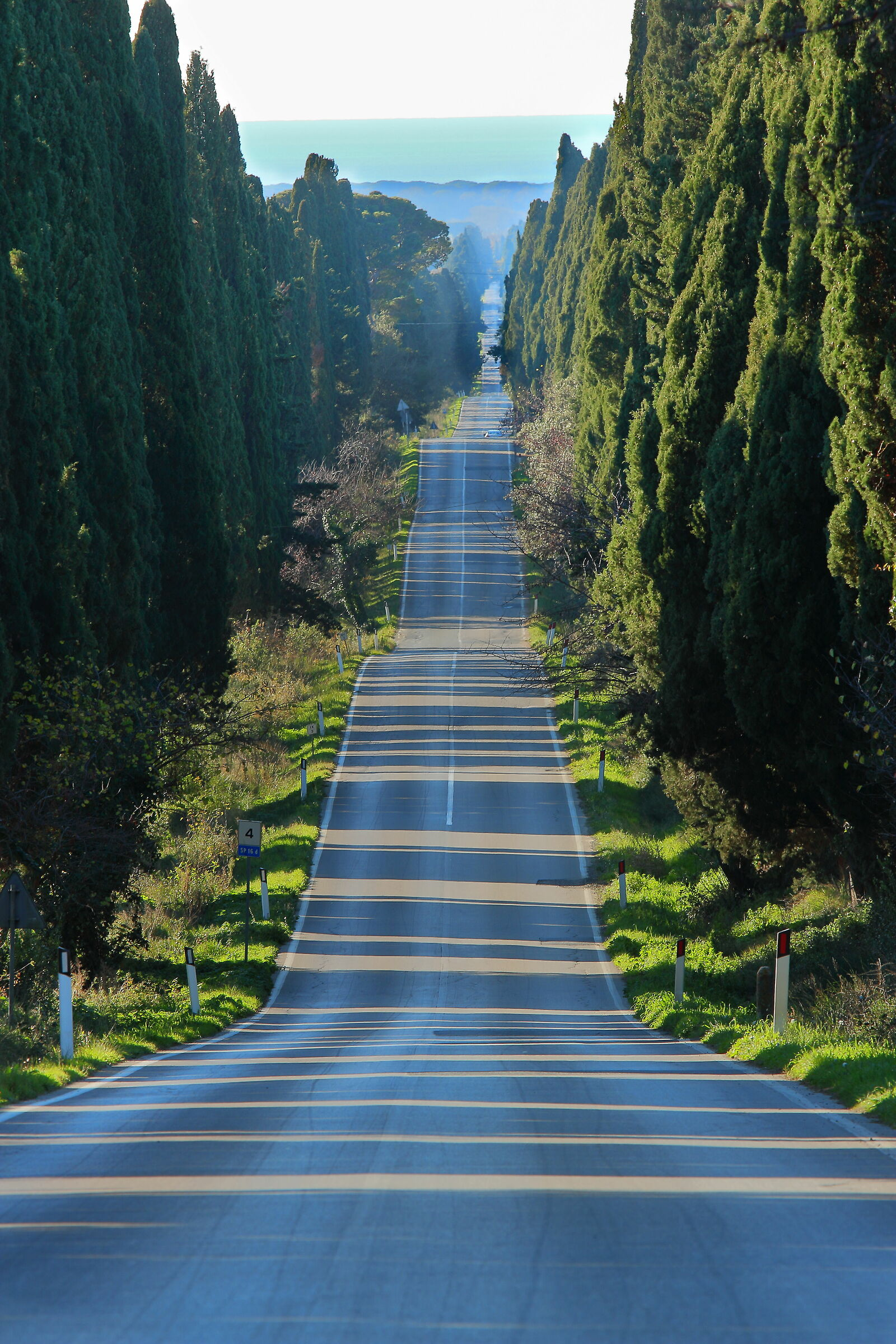 Bolgheri, Viale dei cipressi...