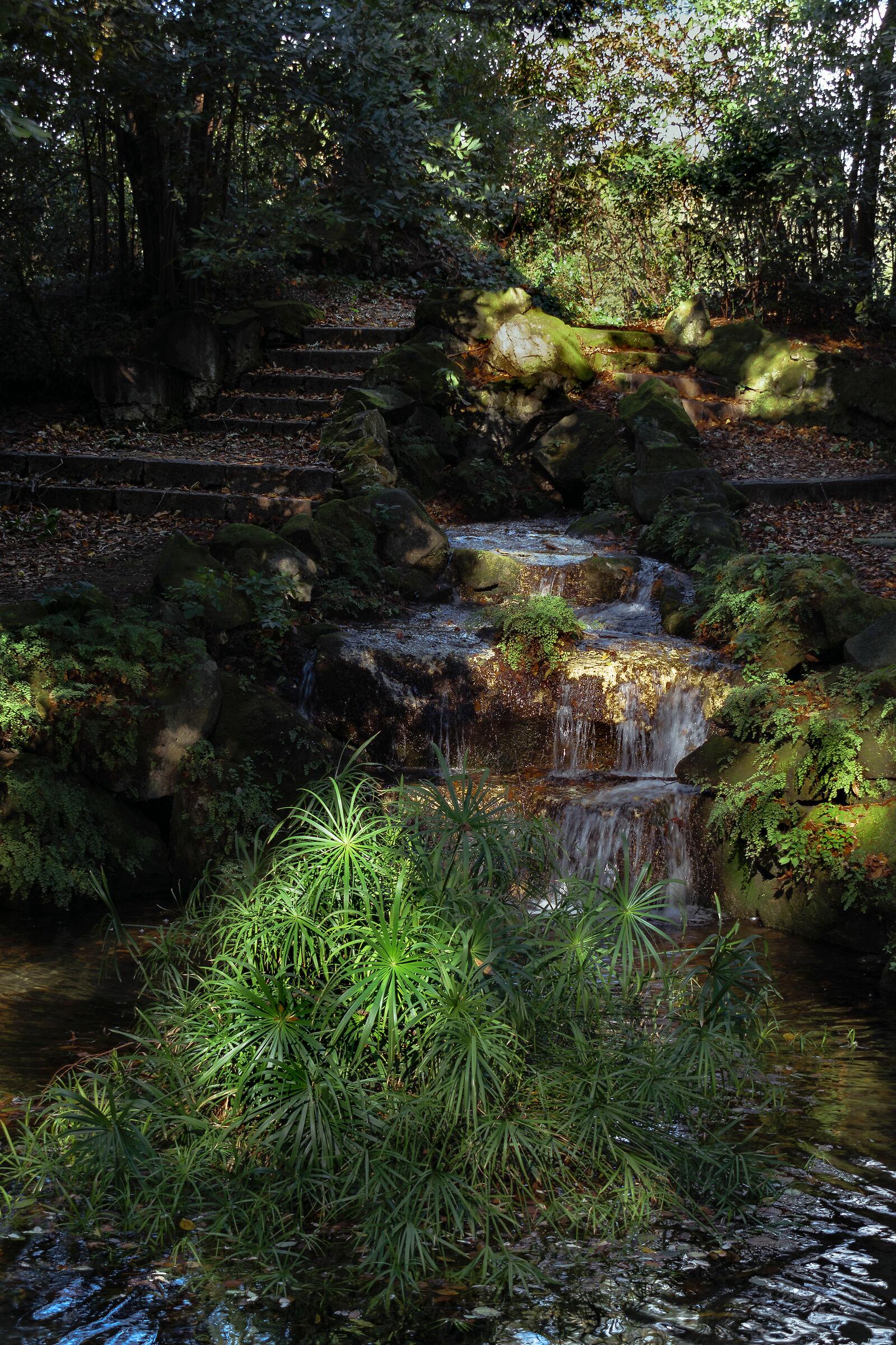 Il bosco incantato...