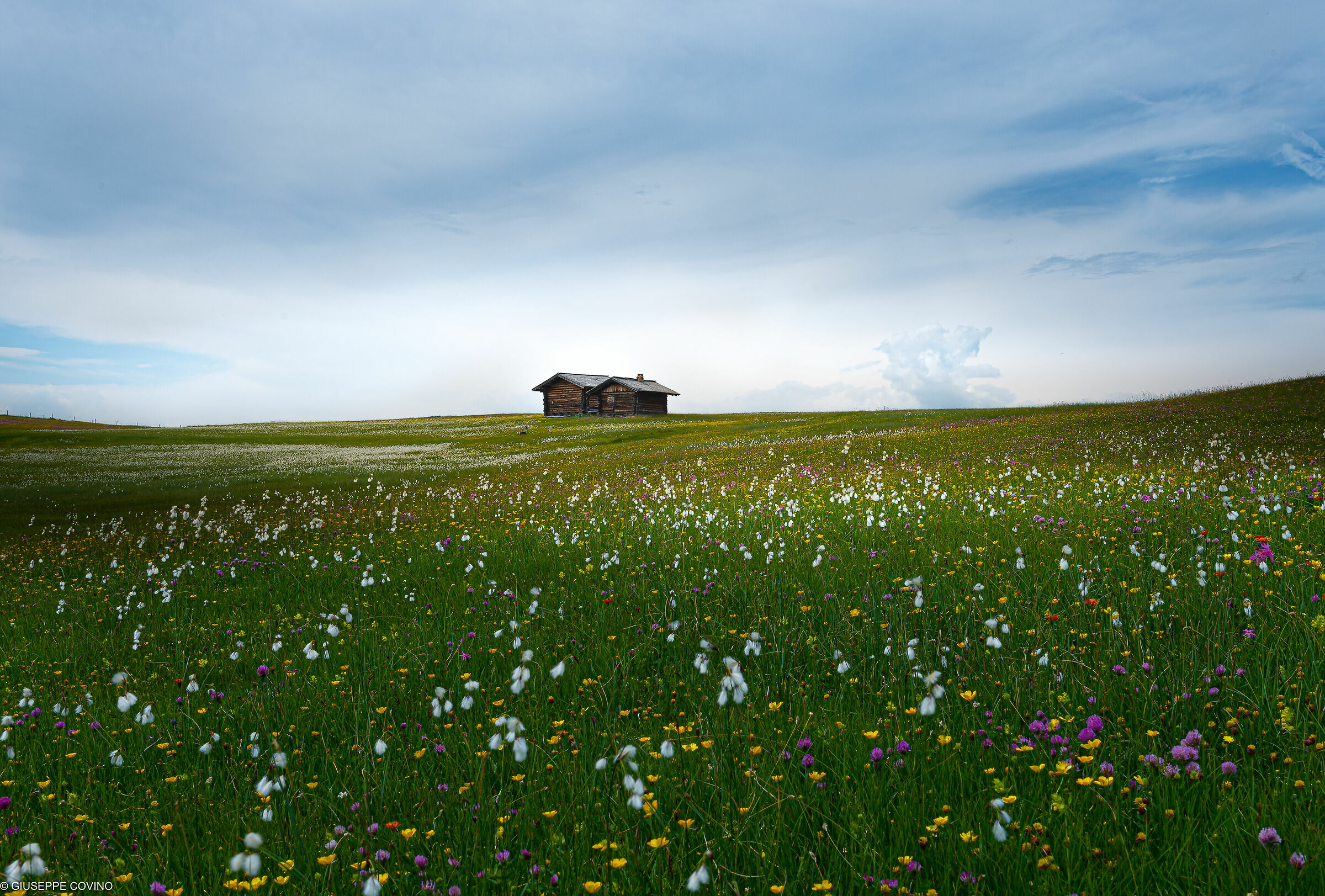 Meadows and flowers...