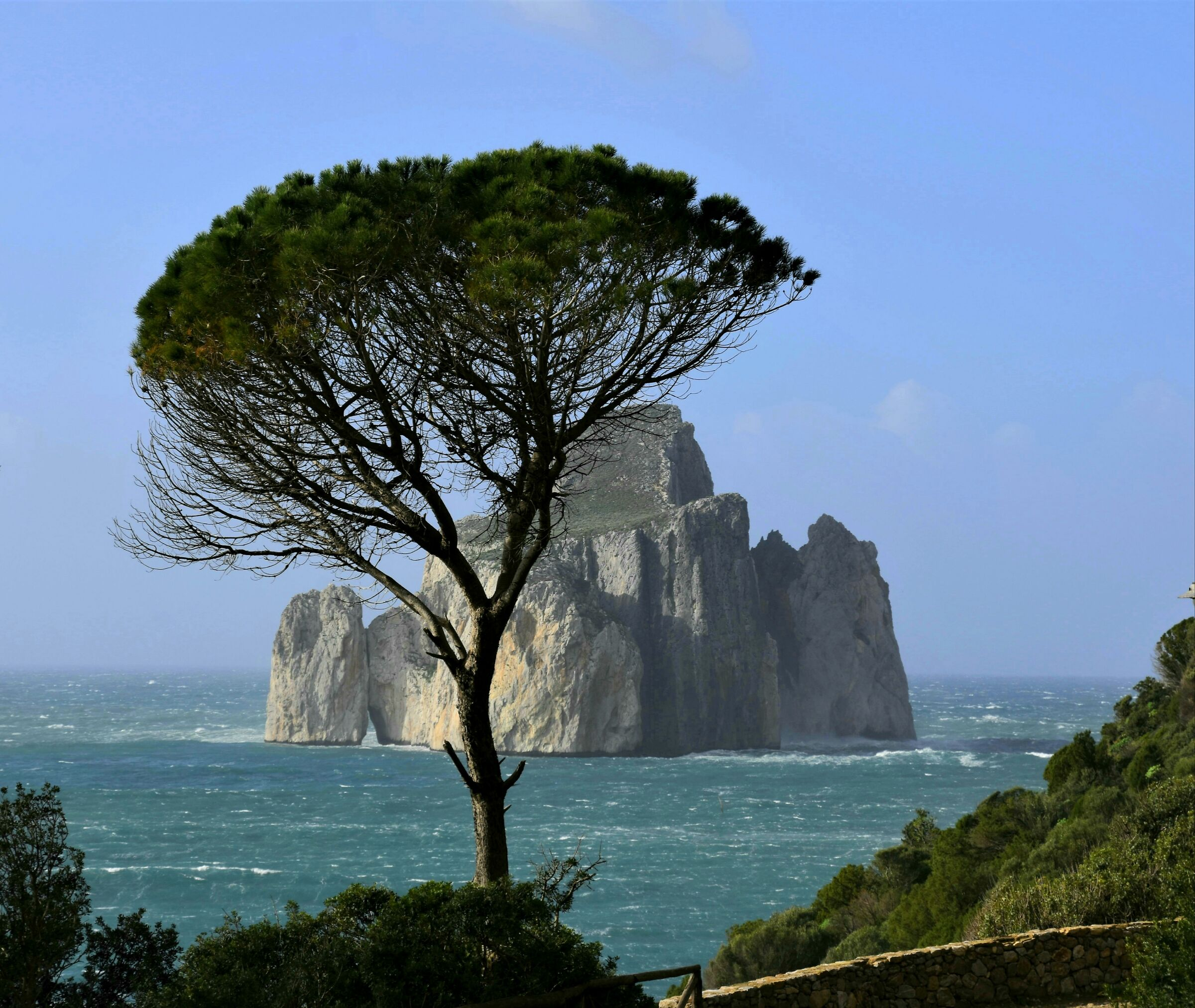 a tree and a rock...