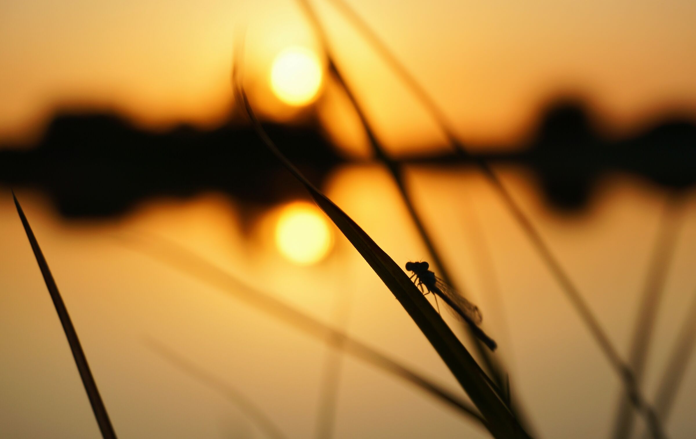 A dragonfly in the sun...