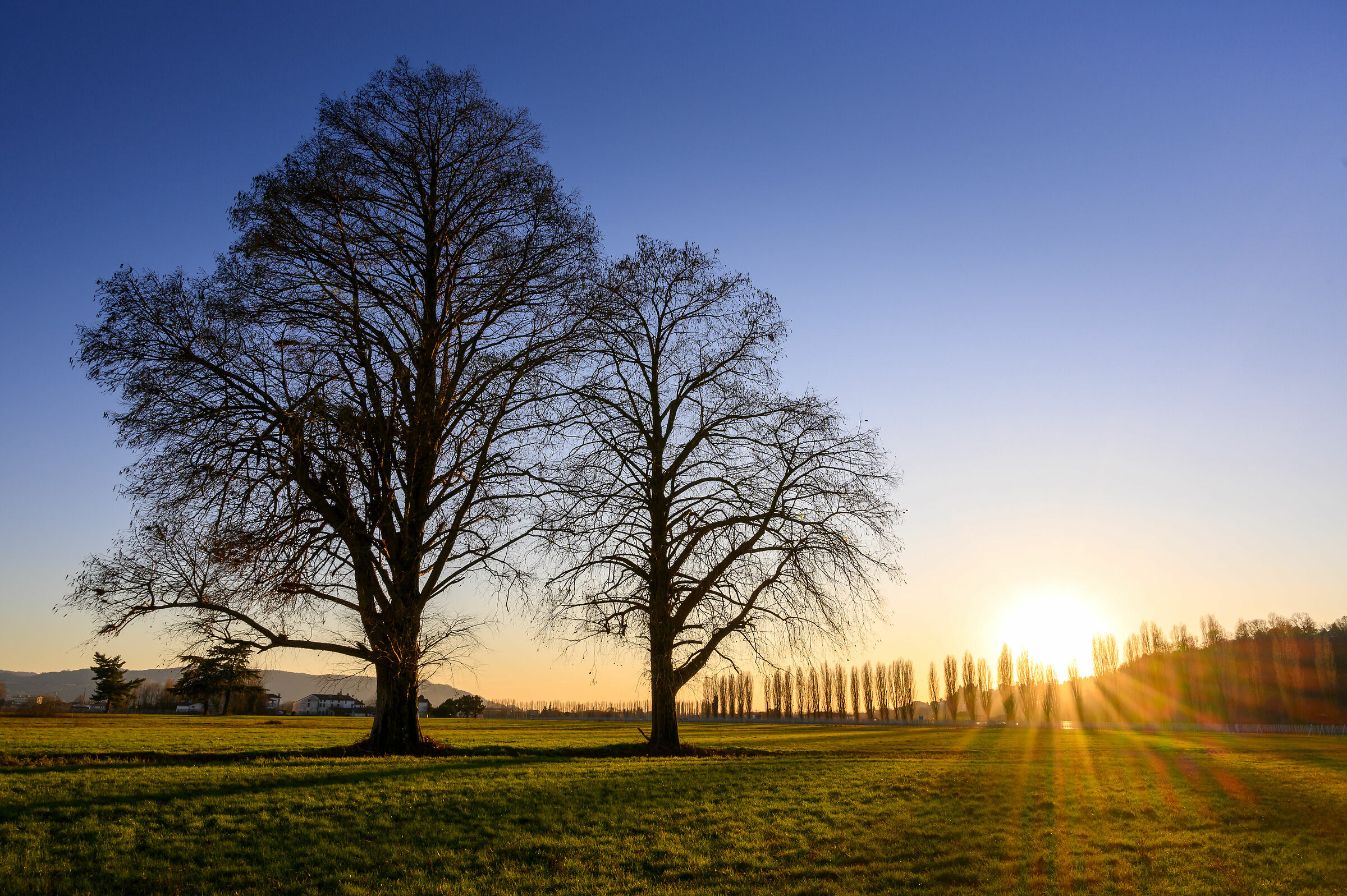 Pair of trees at sunset...