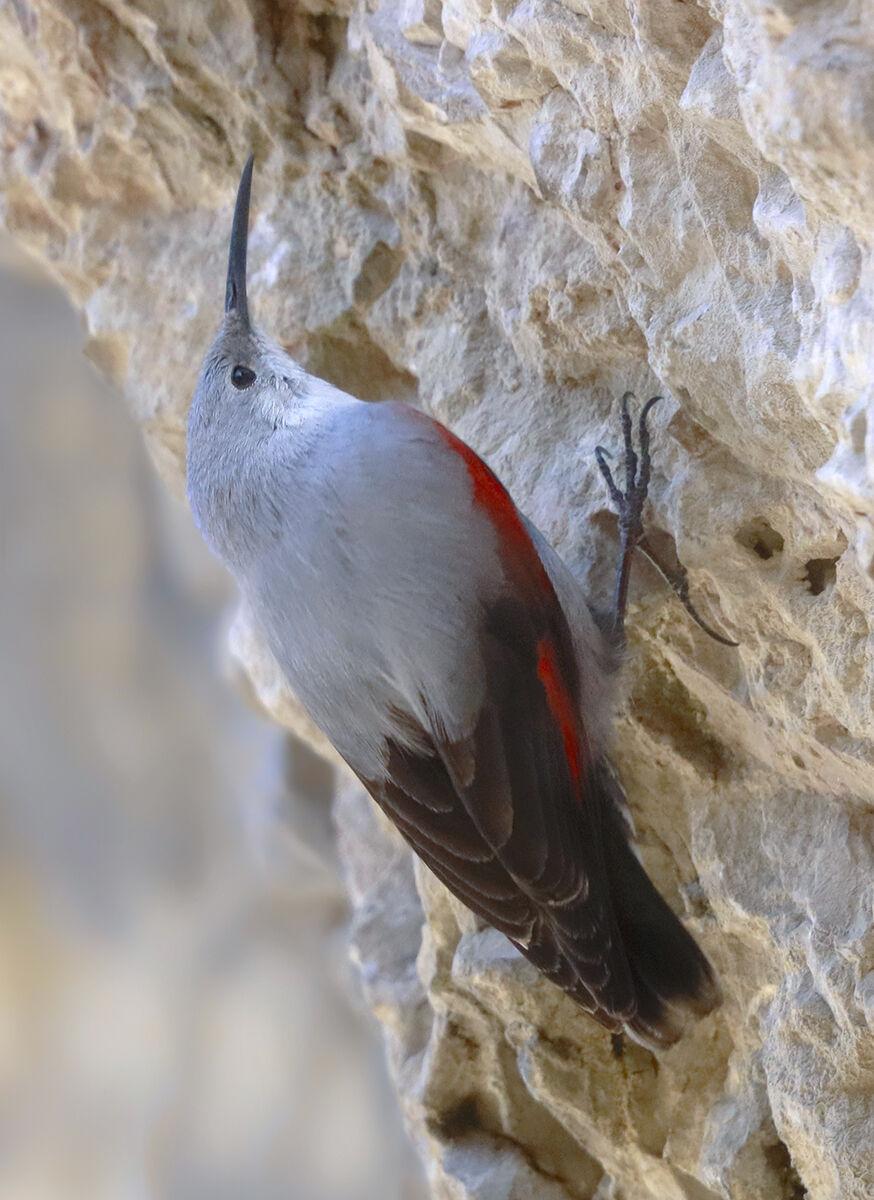 woodpecker wallman sixth degree...