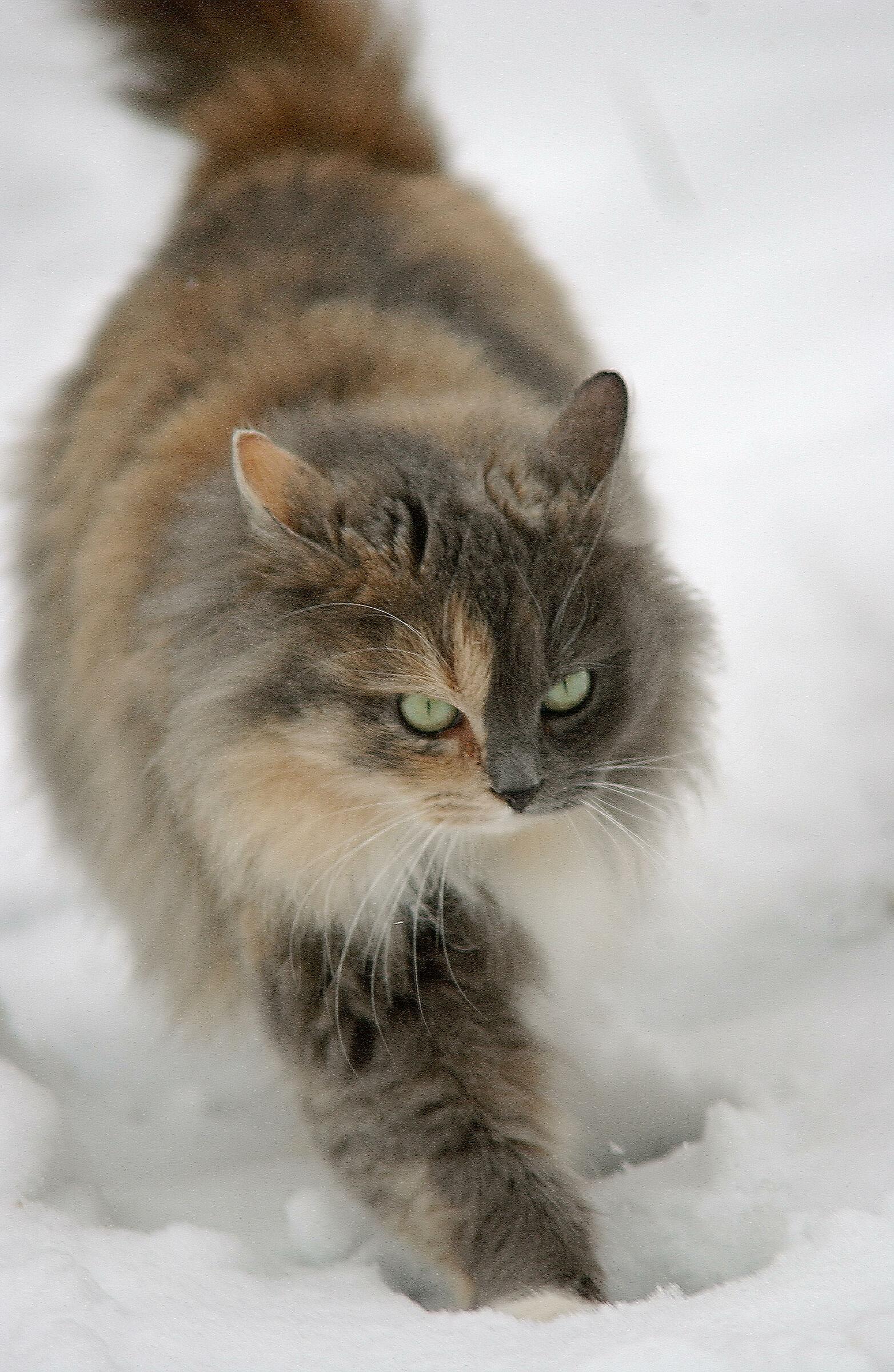 Gatto delle nevi...