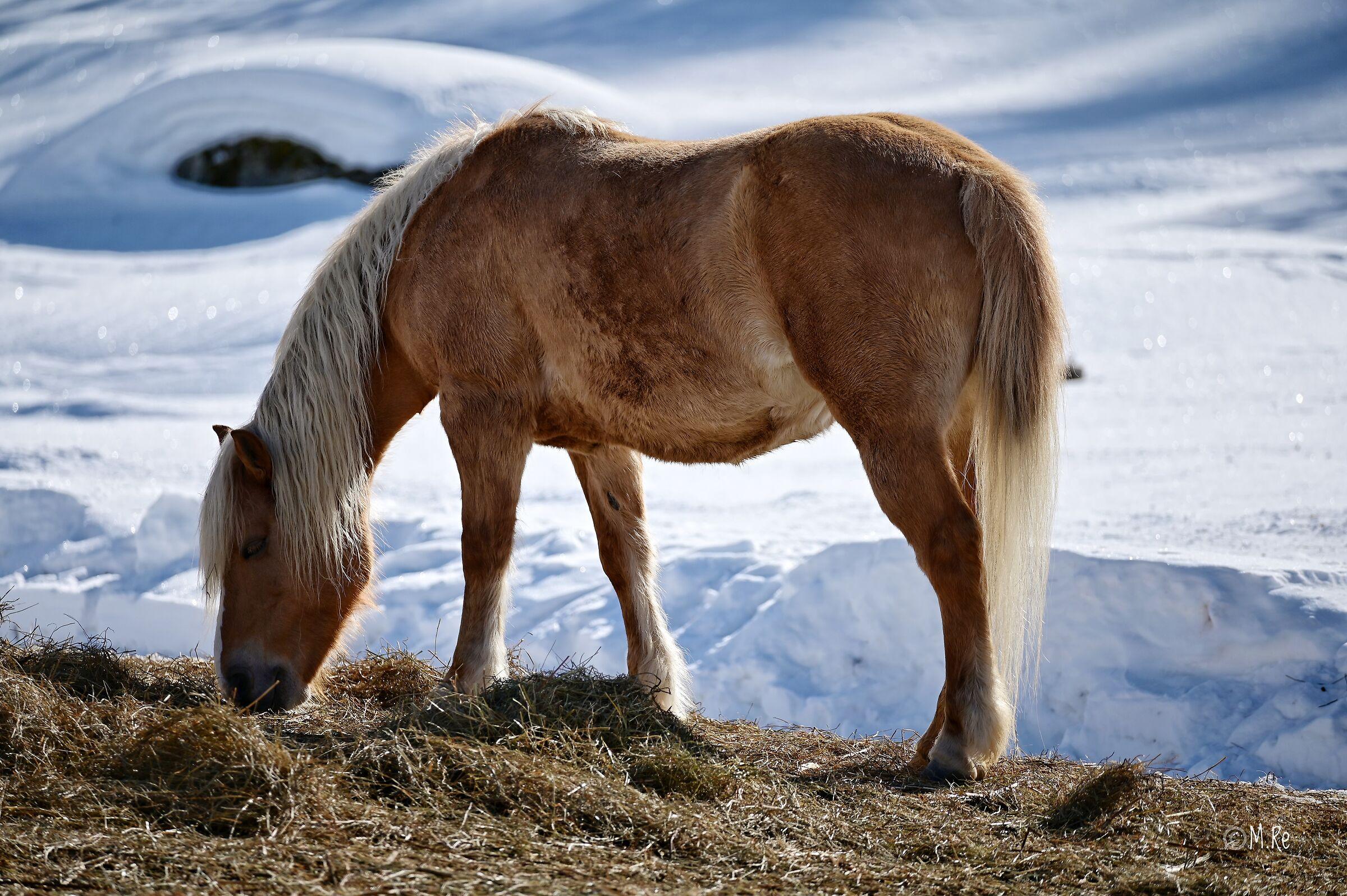 Un cheval en Cheneil...