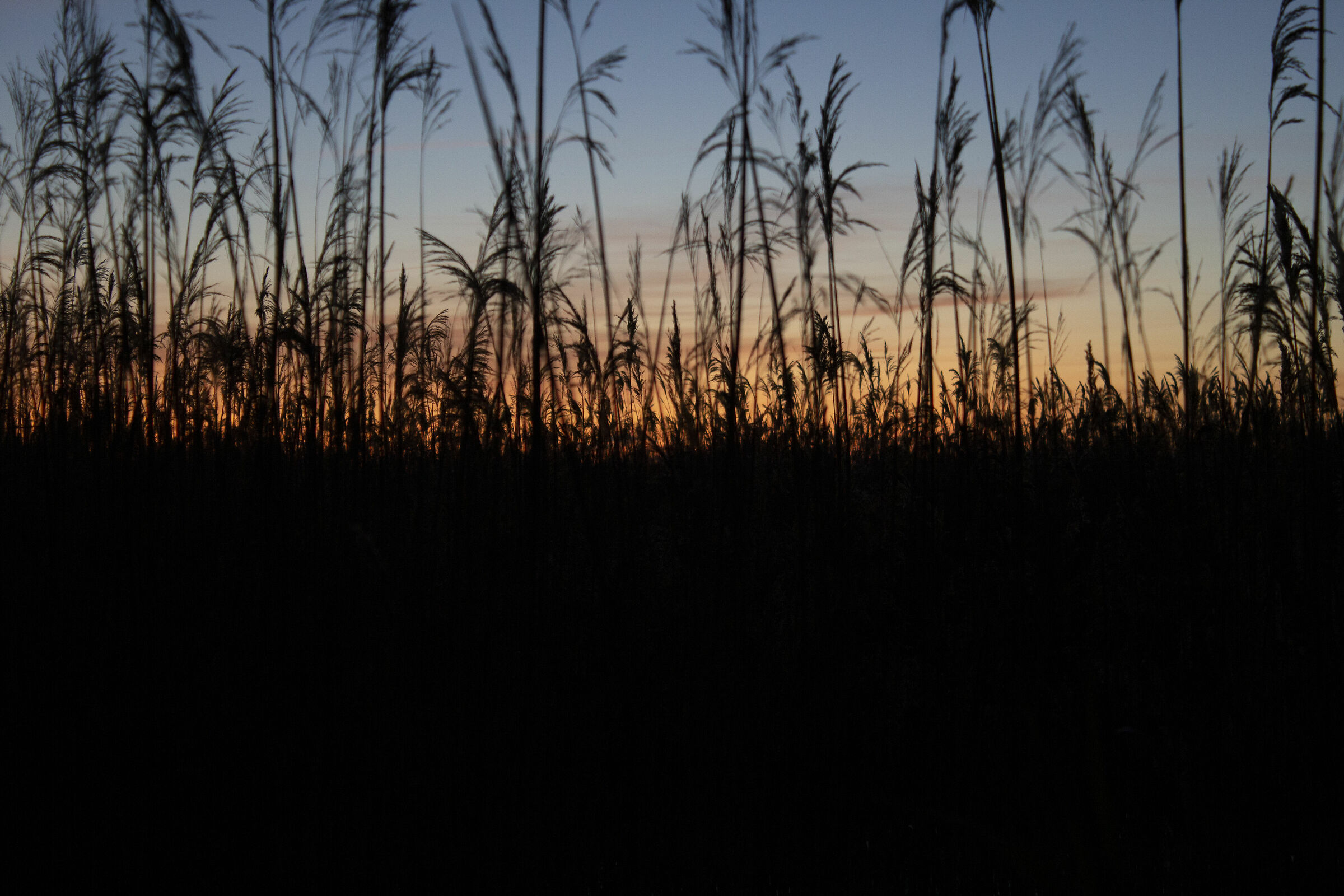Marsh at sunset...