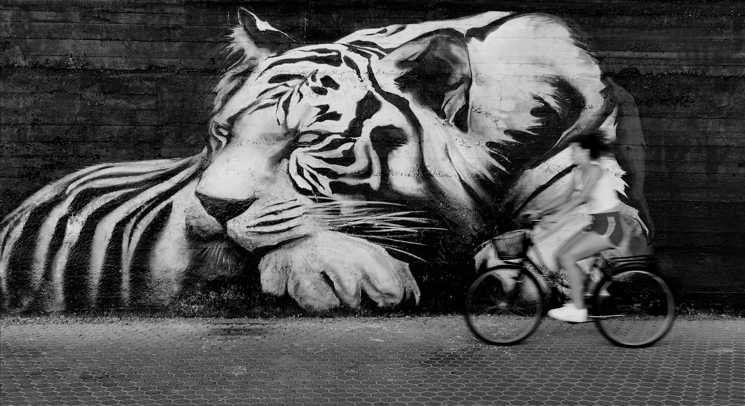 The awakening of the tiger ......