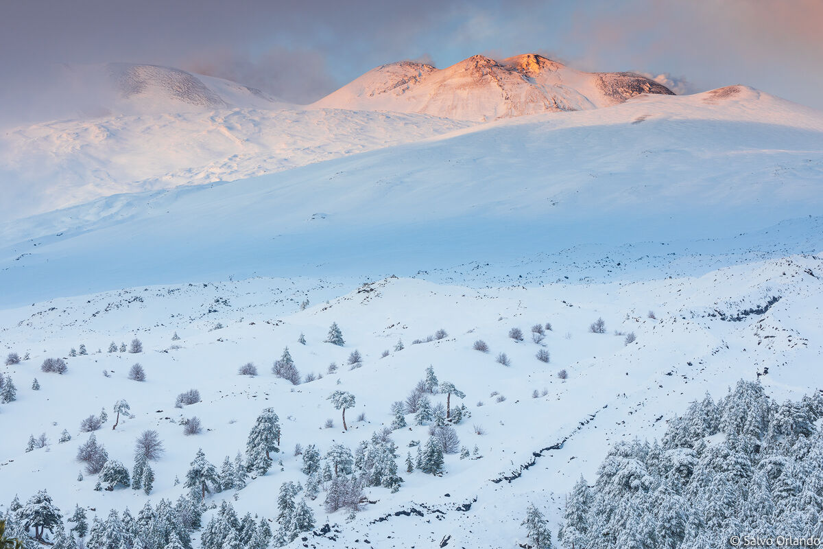 White lands...