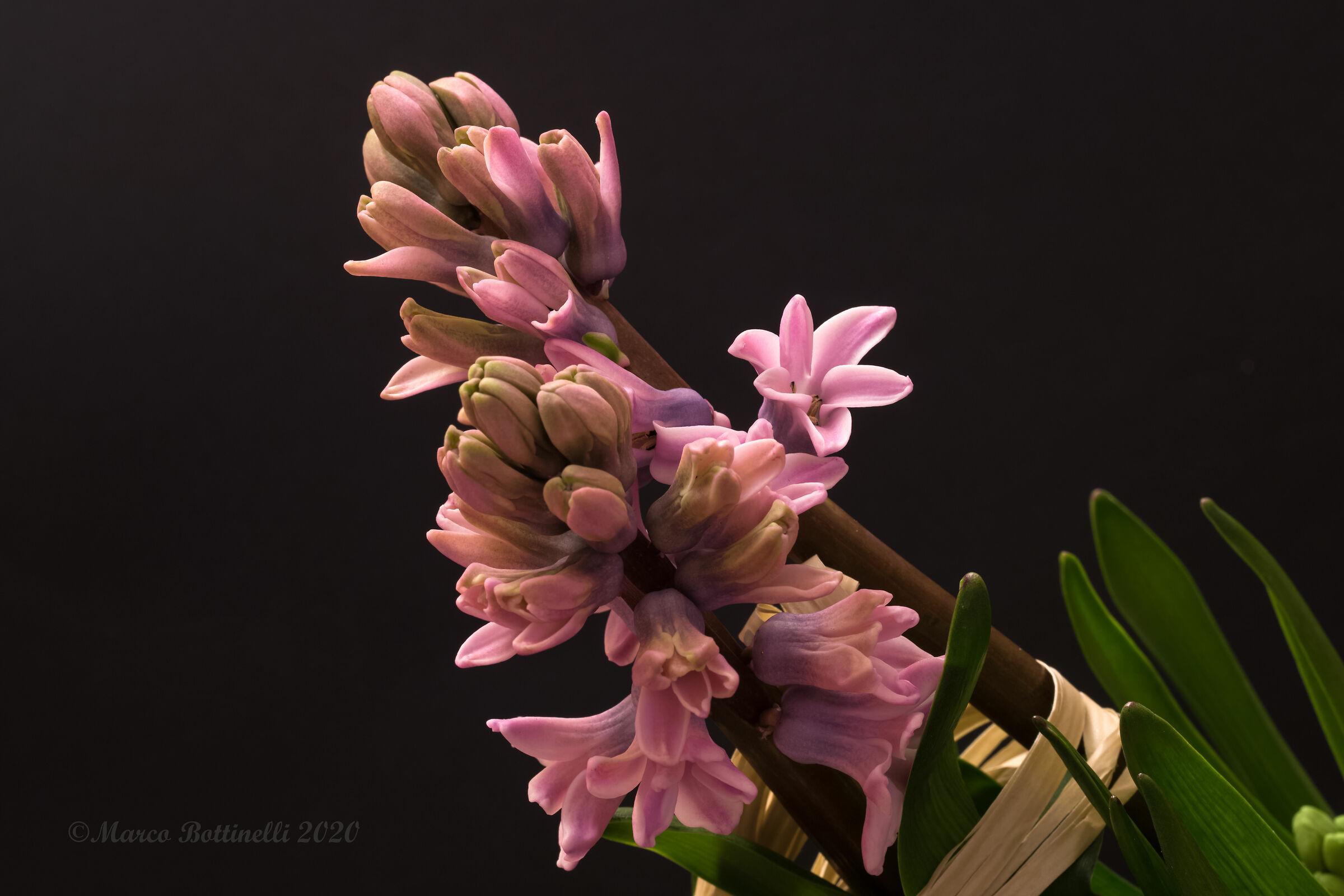 Hyacinths...