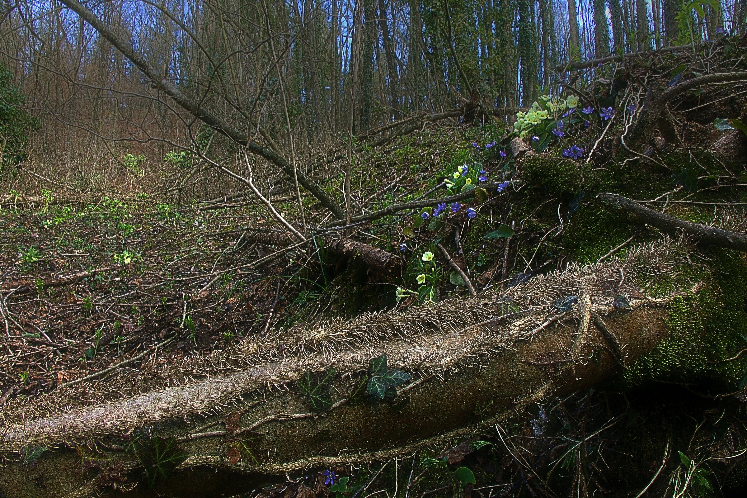 Wild Wood (improved)...