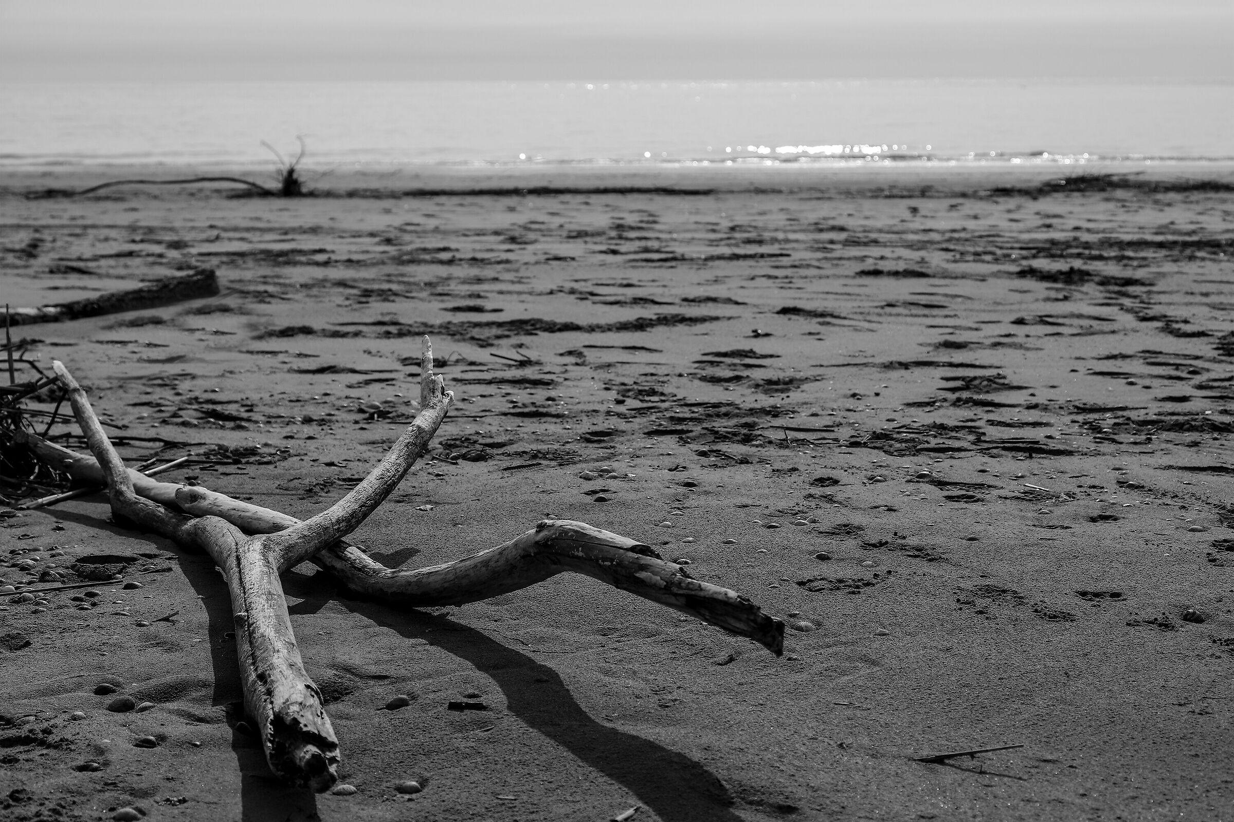 Wild beach ...