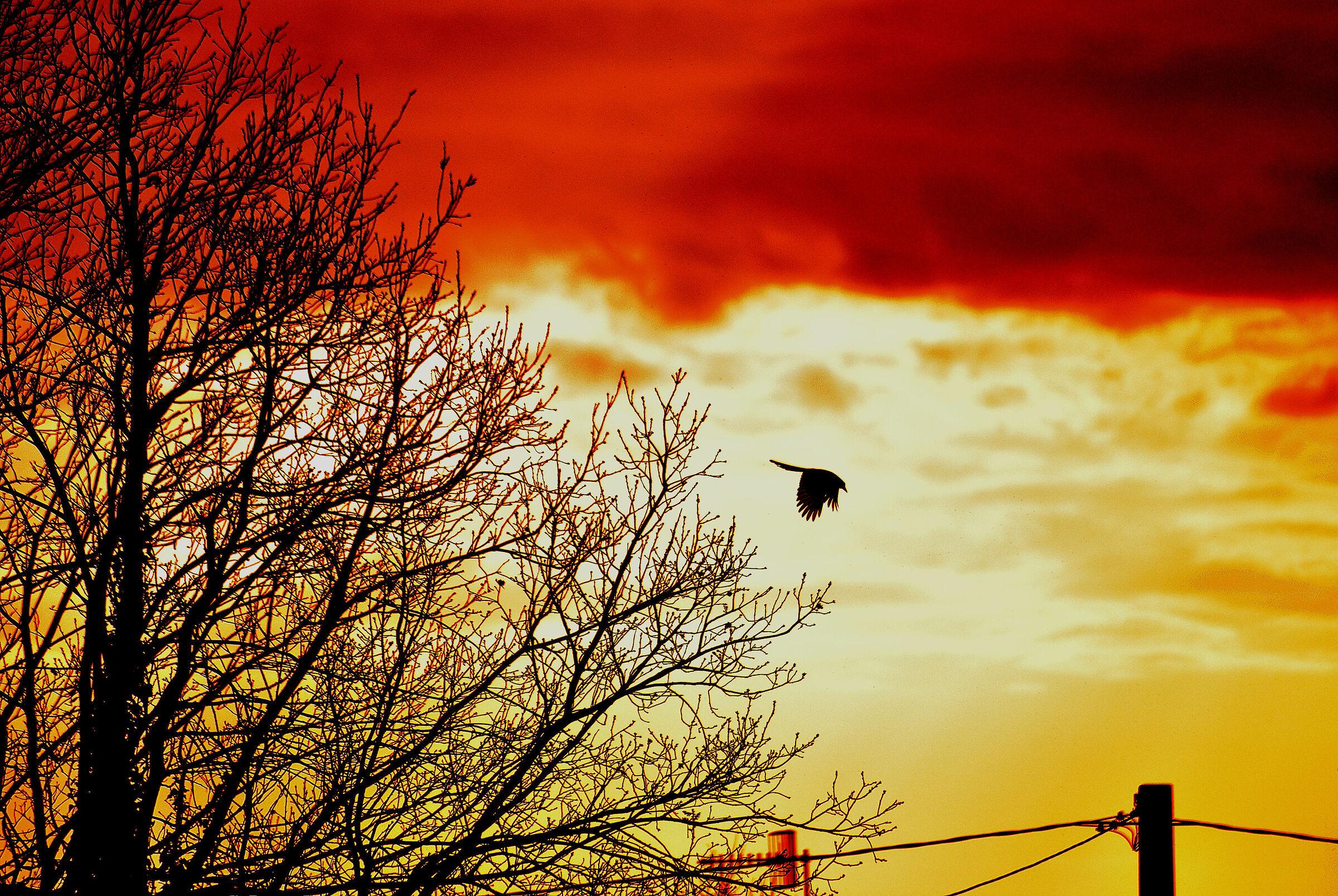 sunset flight...
