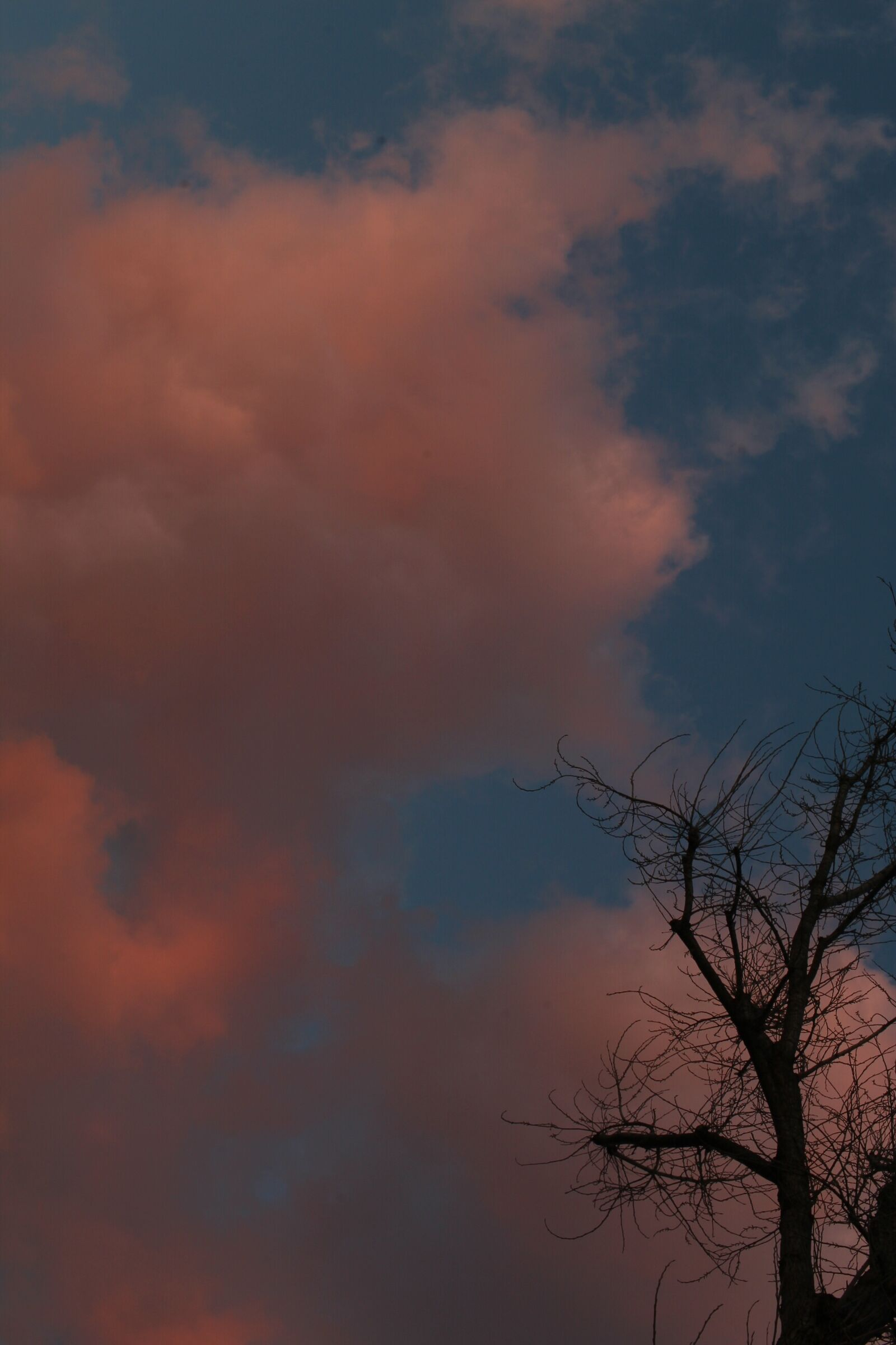 Pink clouds ...