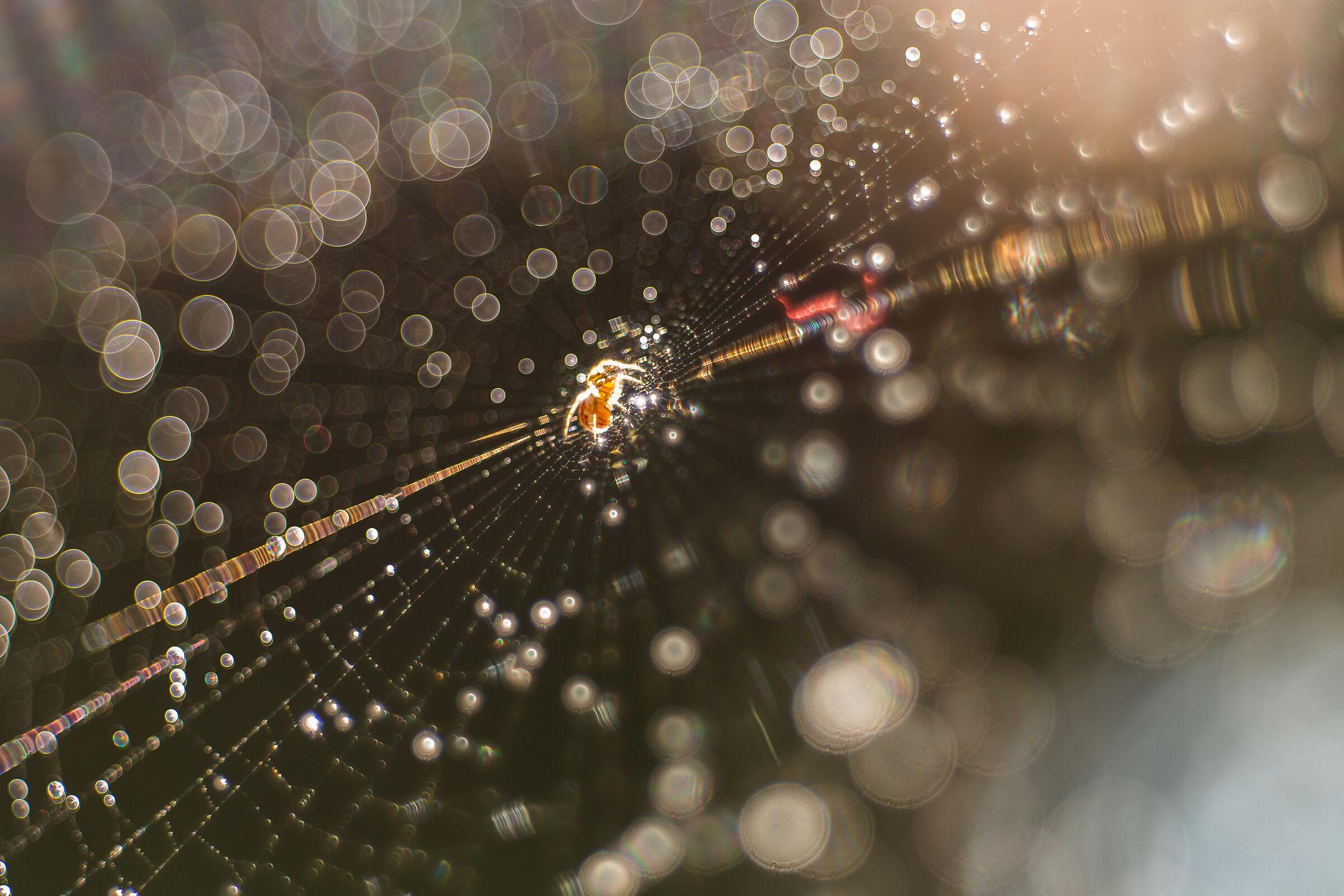 dreamer spider...