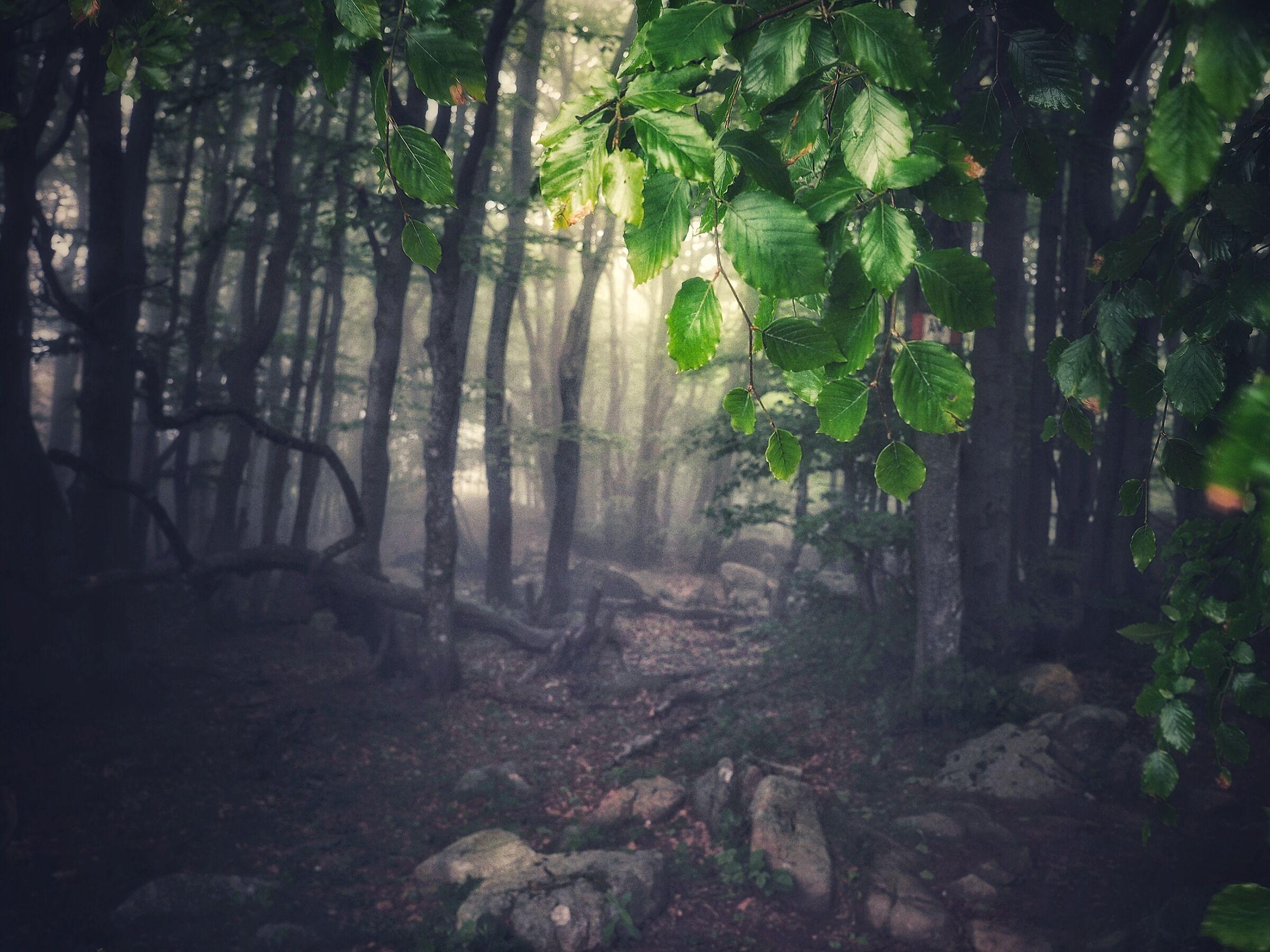 Il sentiero...
