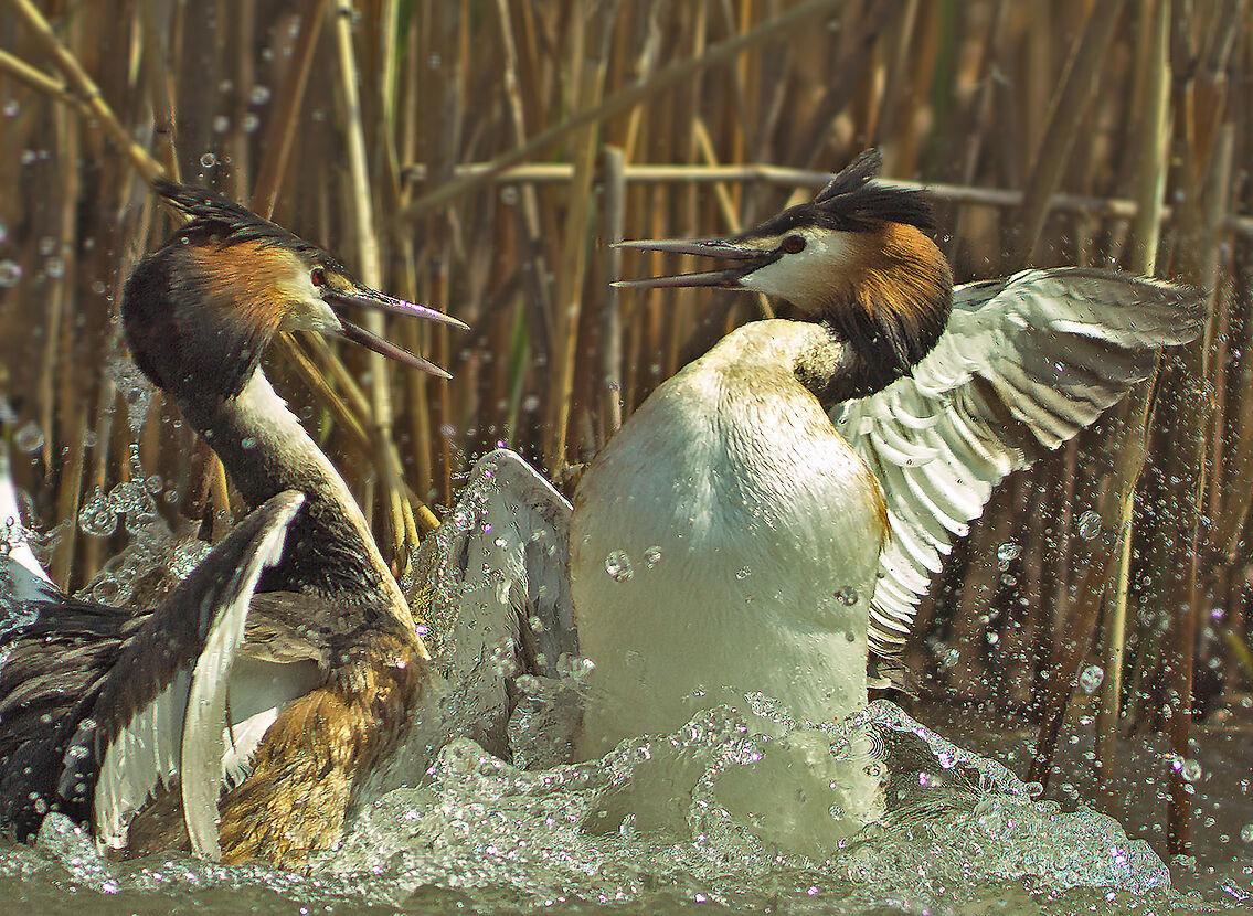 The quarrel...