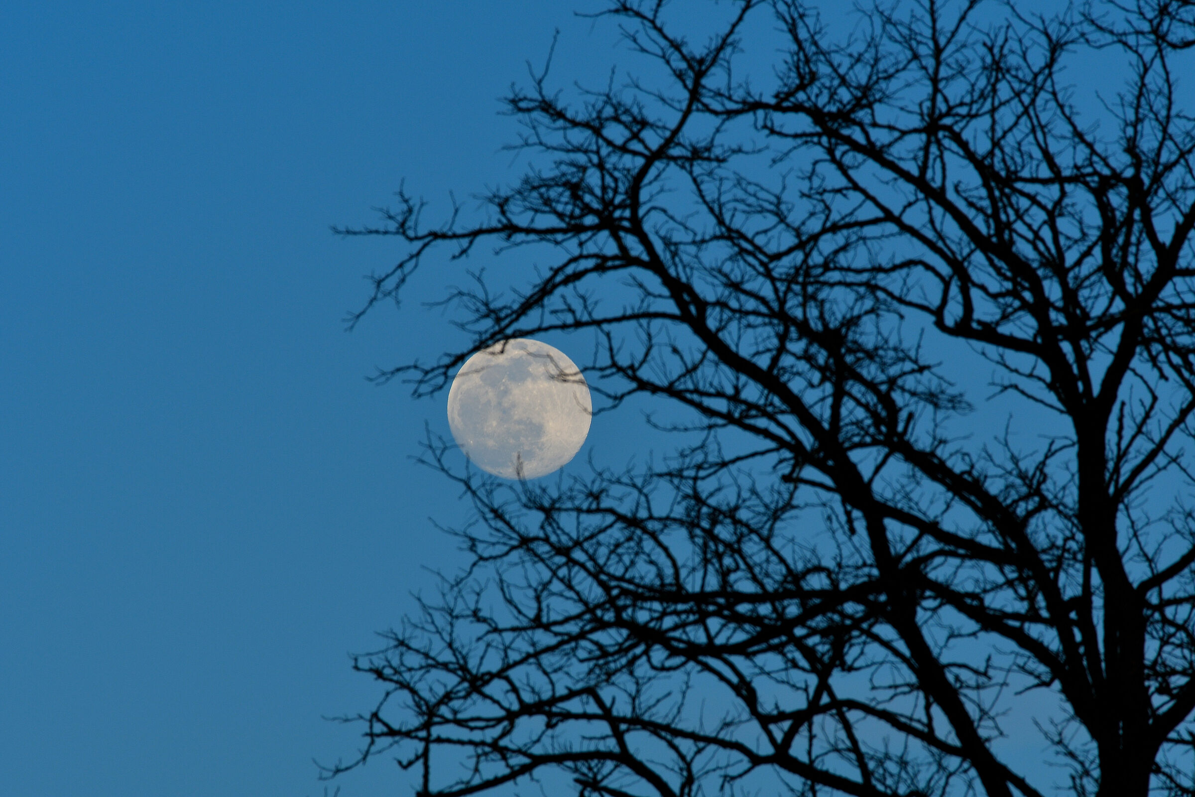 Full moon and blue time...