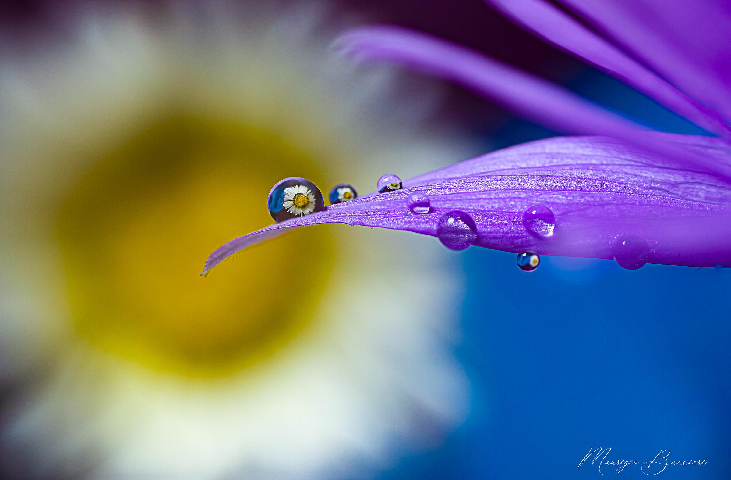 Drops on flower...
