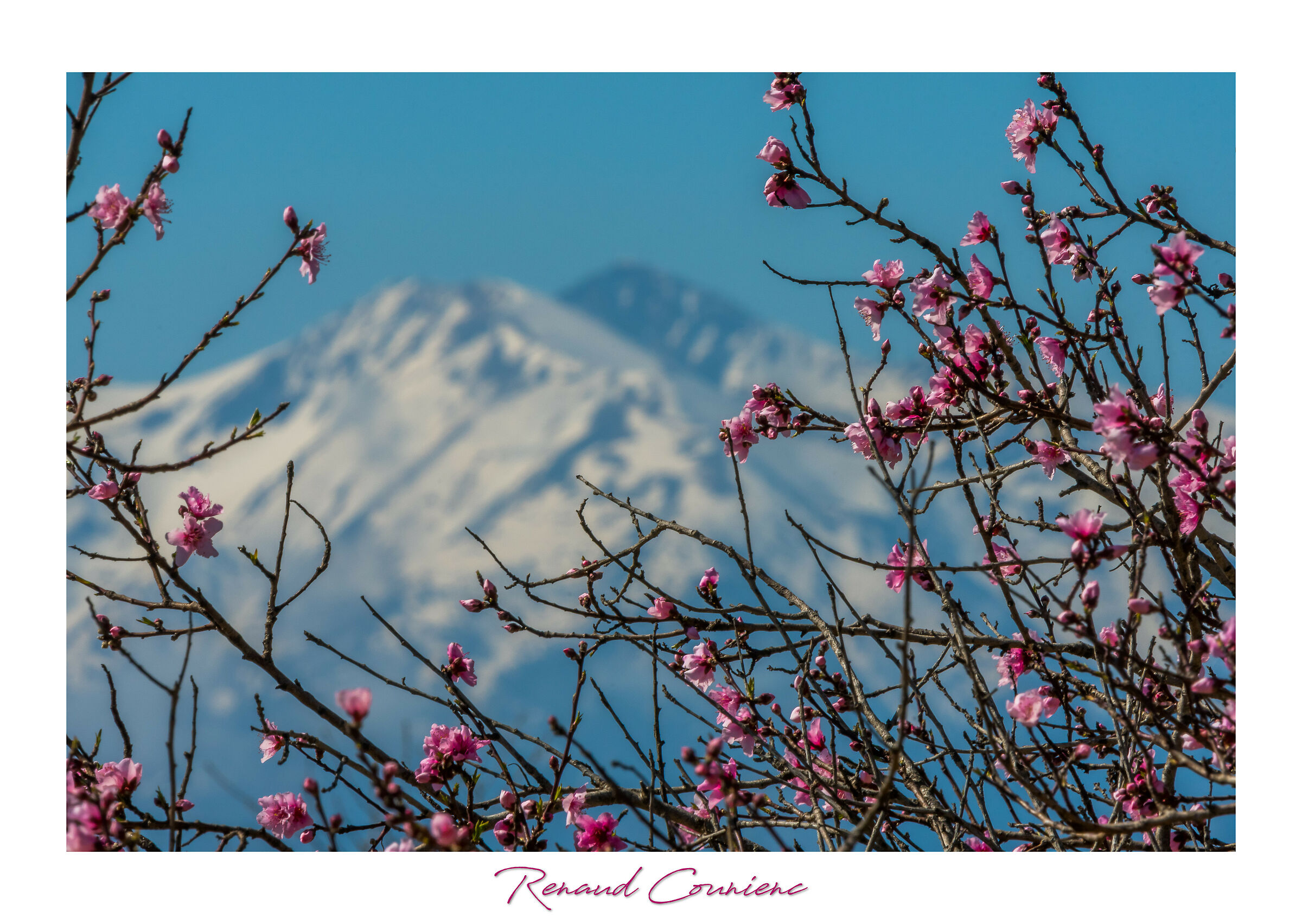 The mountain behind the peach trees...
