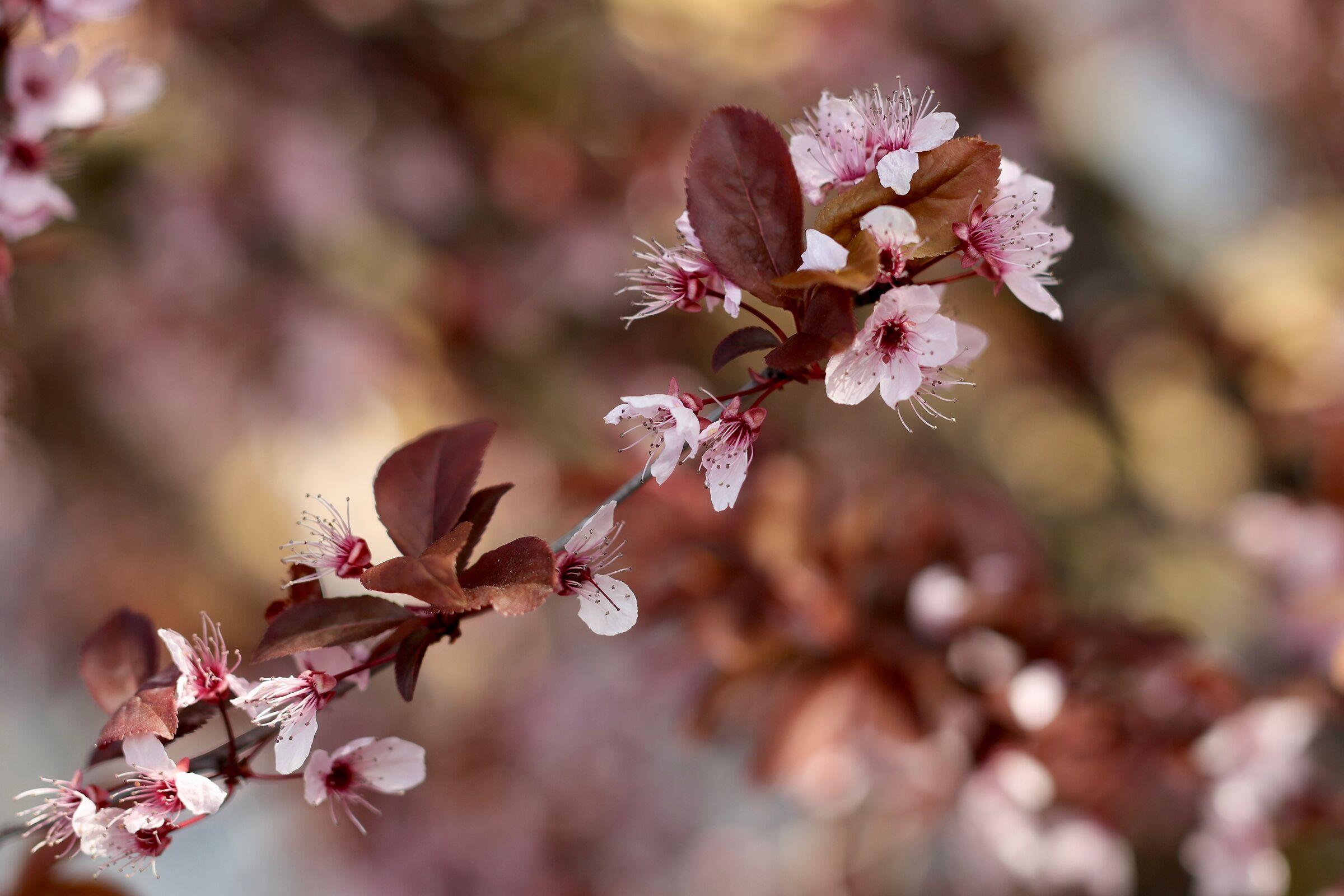 wild prune...