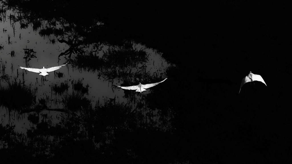 Three in flight (White and Black)...