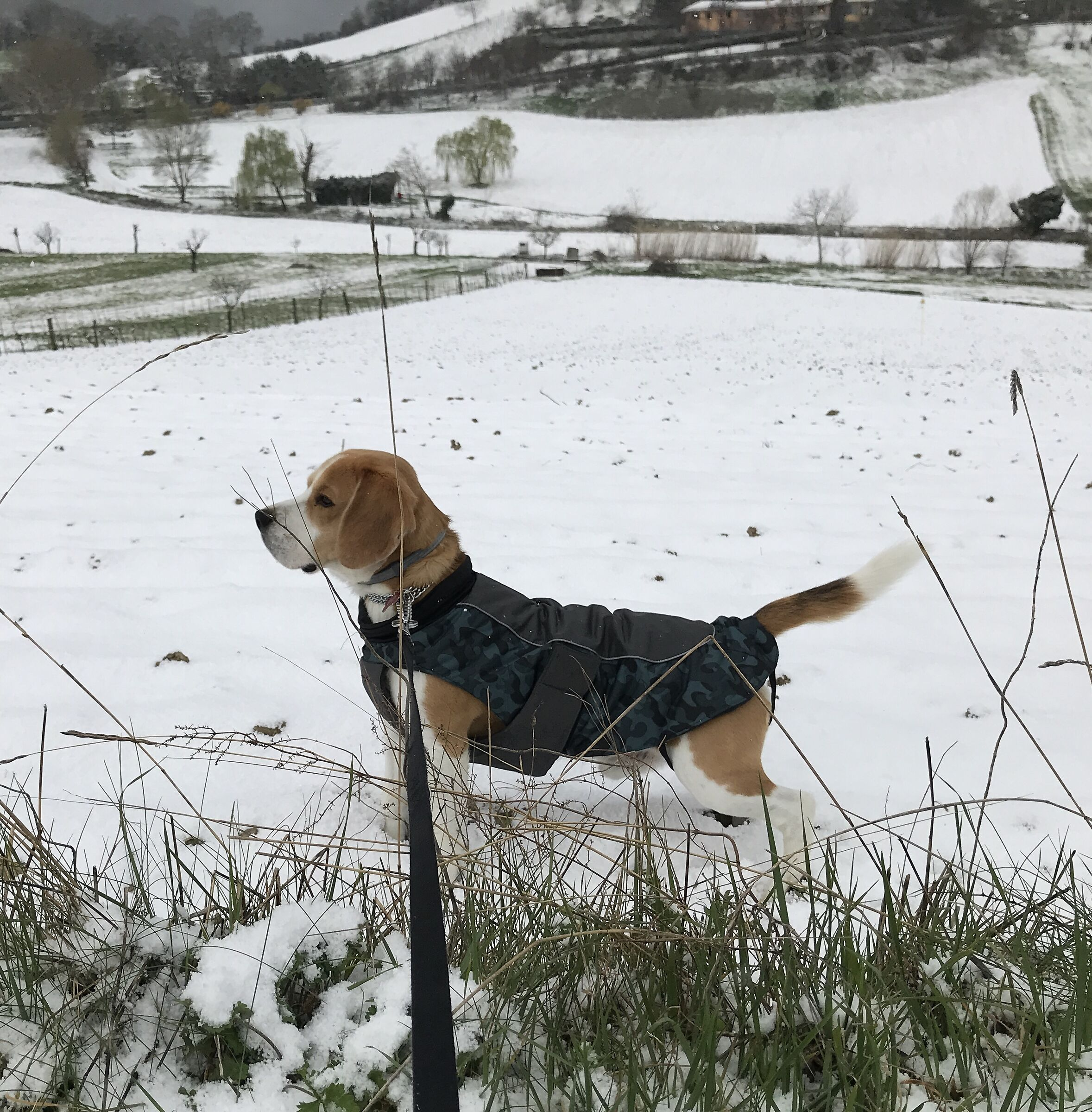 Giotto in the snow in spring...