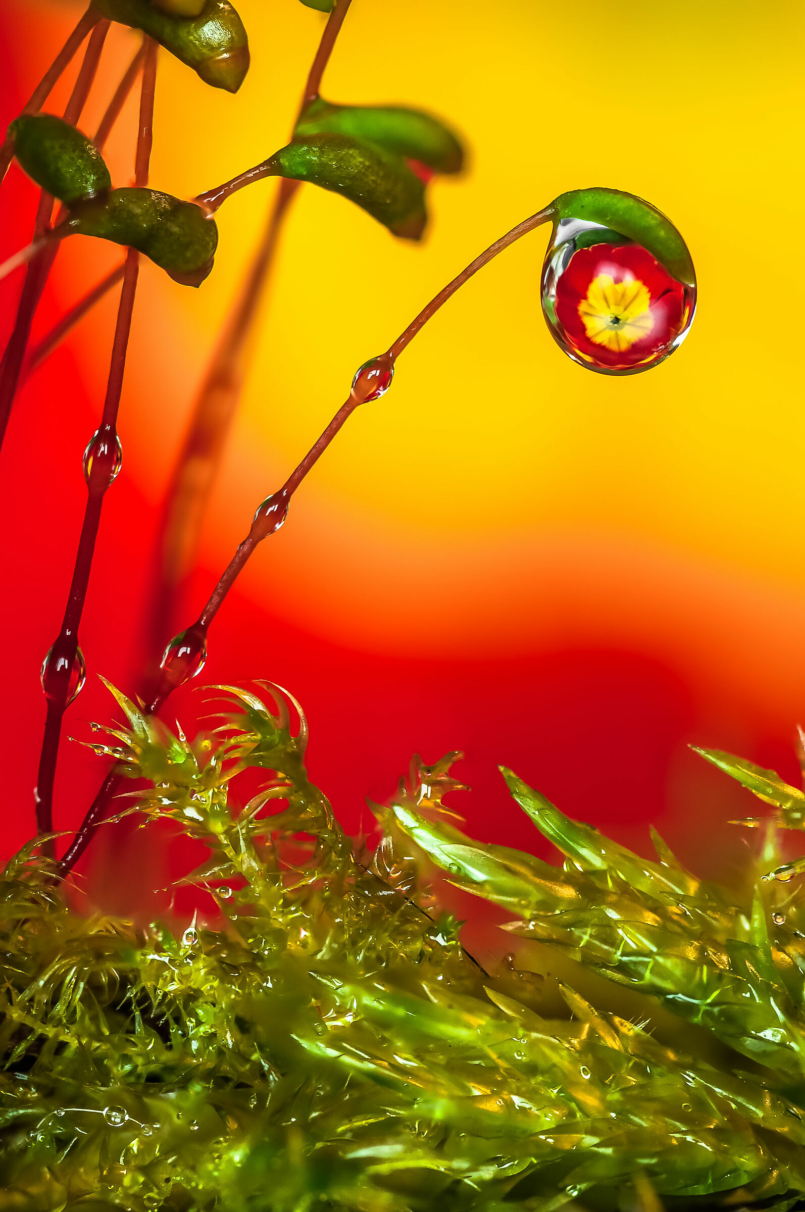 Drops & Flowers in macro photography...