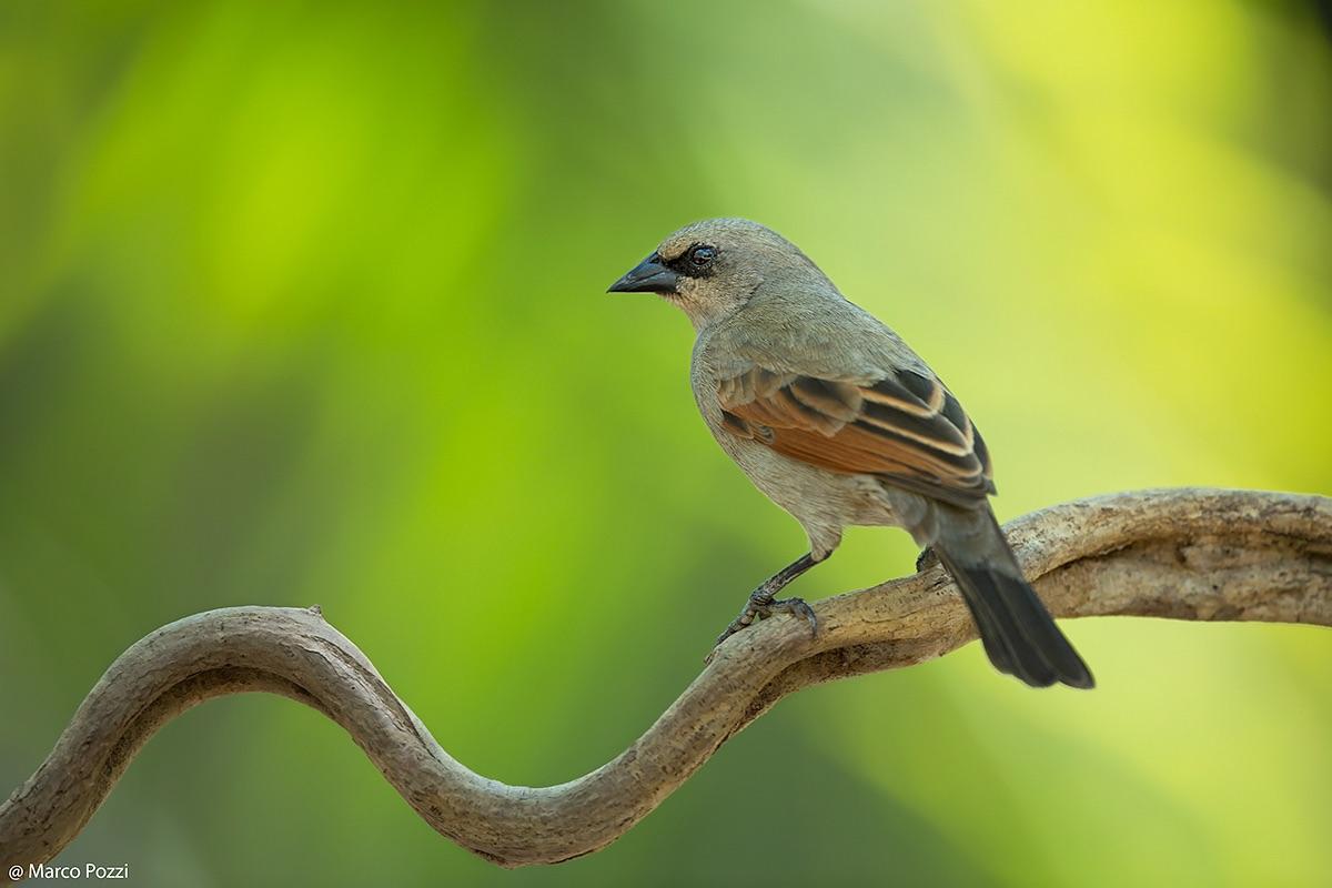 Just Birds, New ...