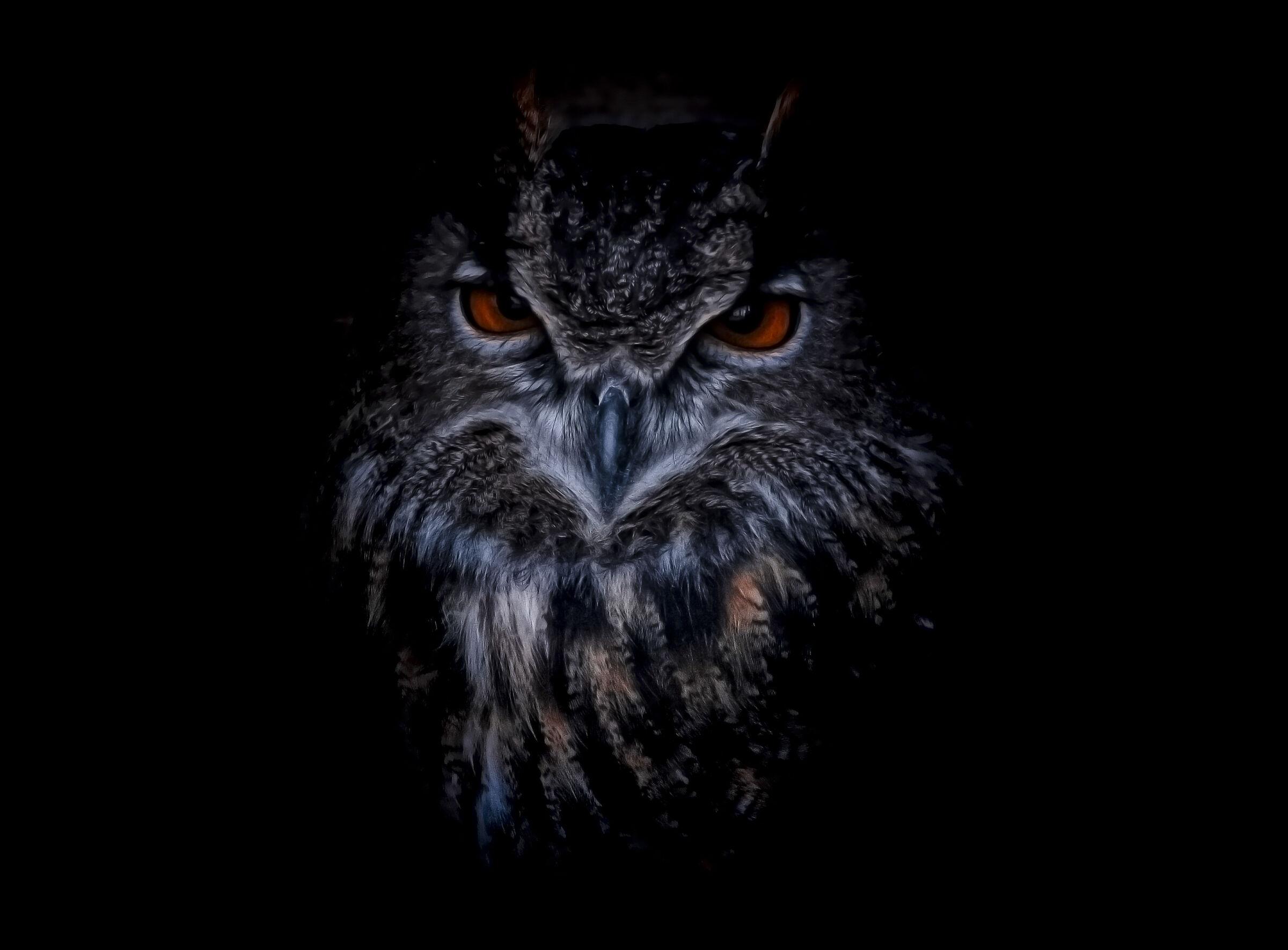 Royal owl...