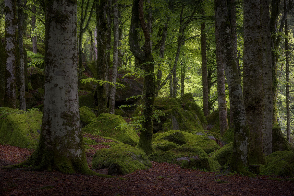 Alone into the magic green wood...