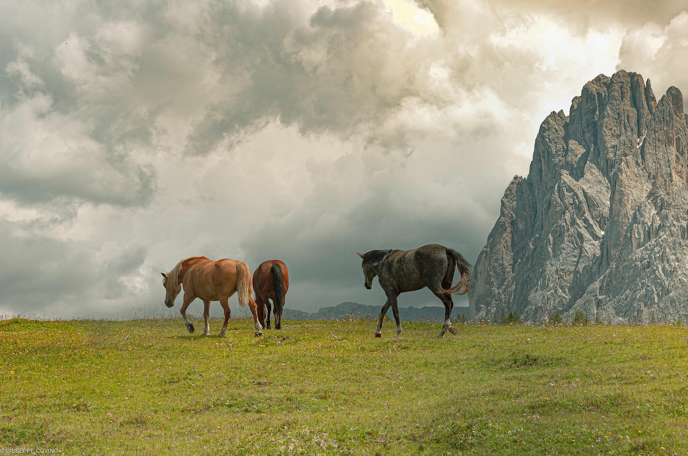 Sassolungo Horses 2...