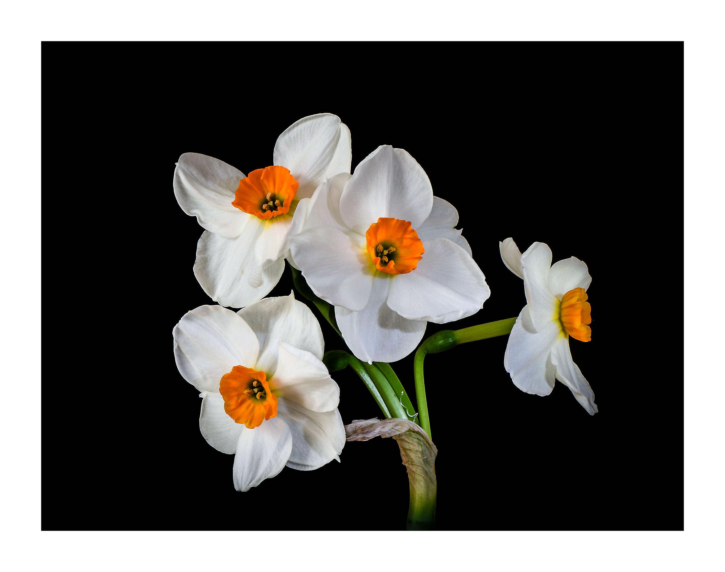 Narciso, il fiore della bellezza....