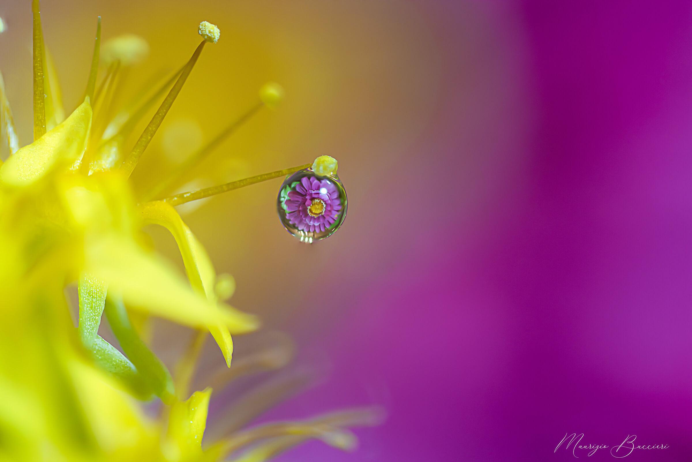 Drop on flower...