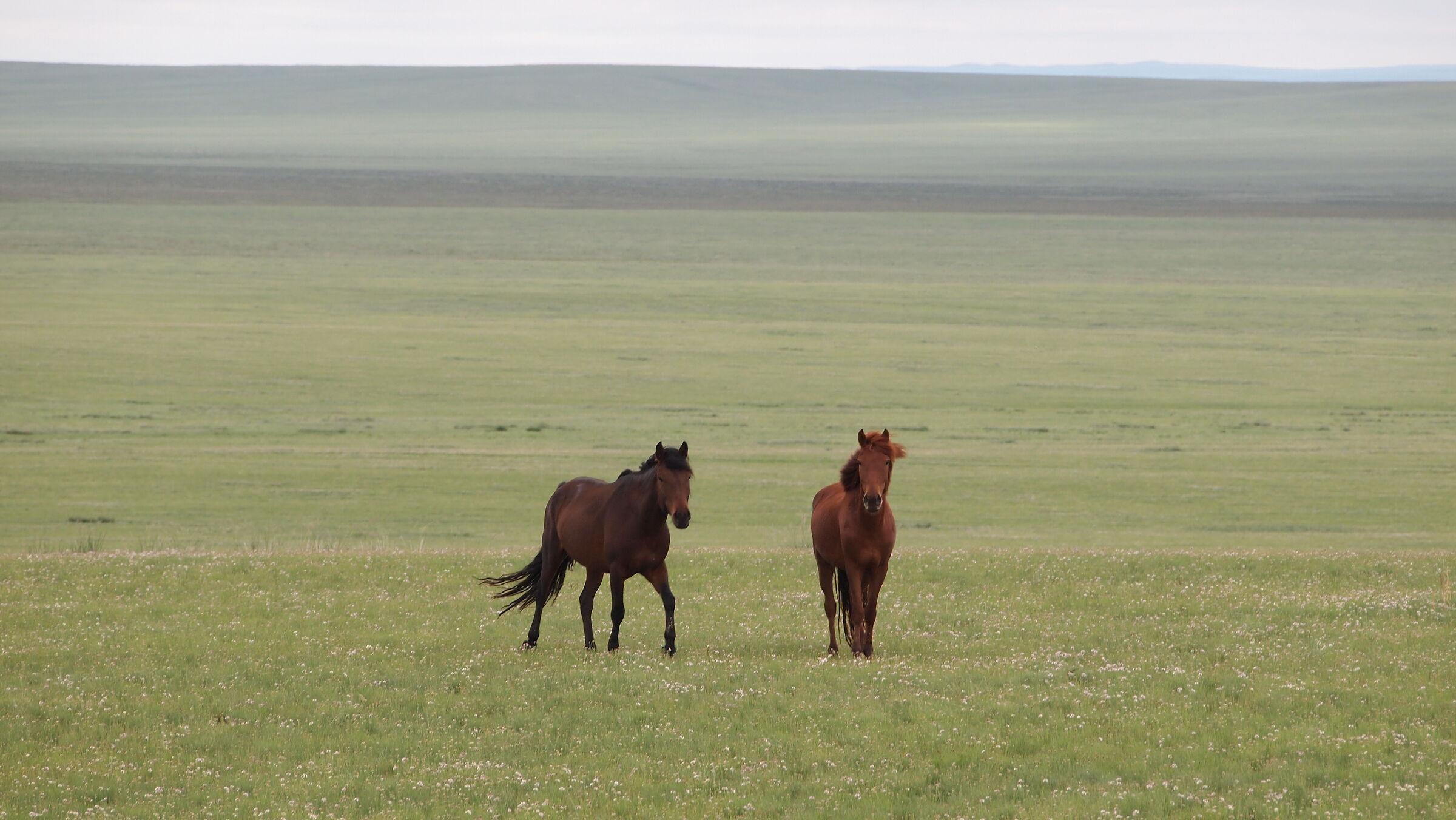 Mongolia 2...