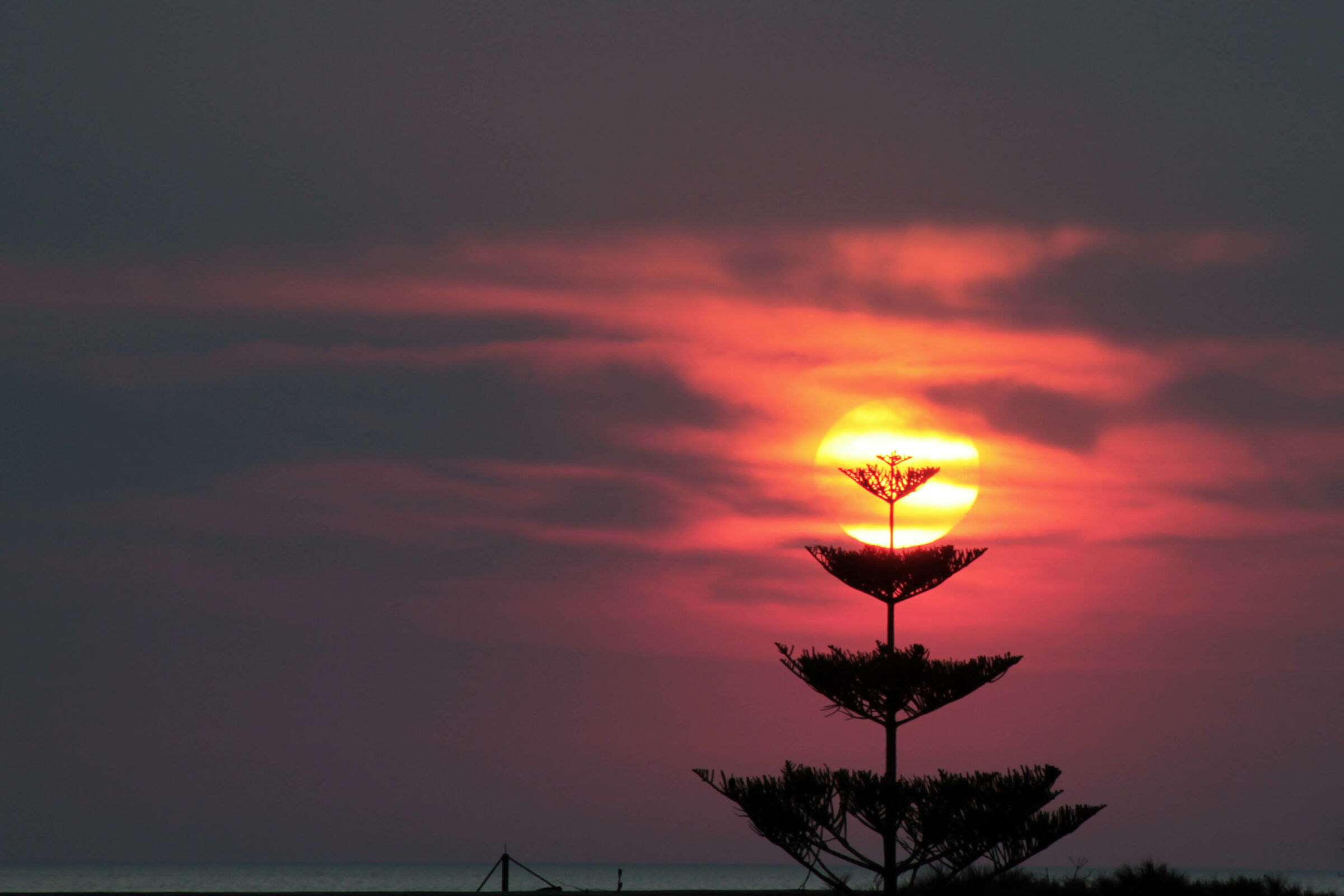 Lil sunset on the araucaria...